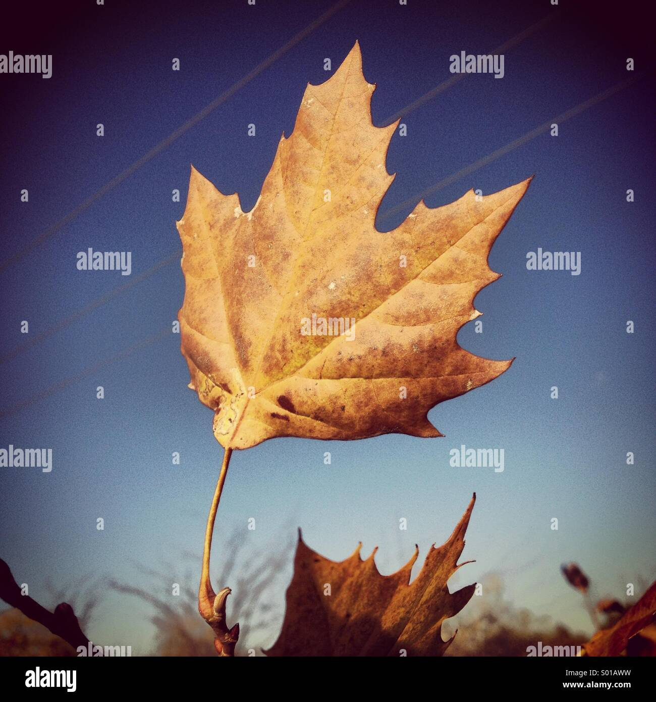 Brown leaf - Stock Image