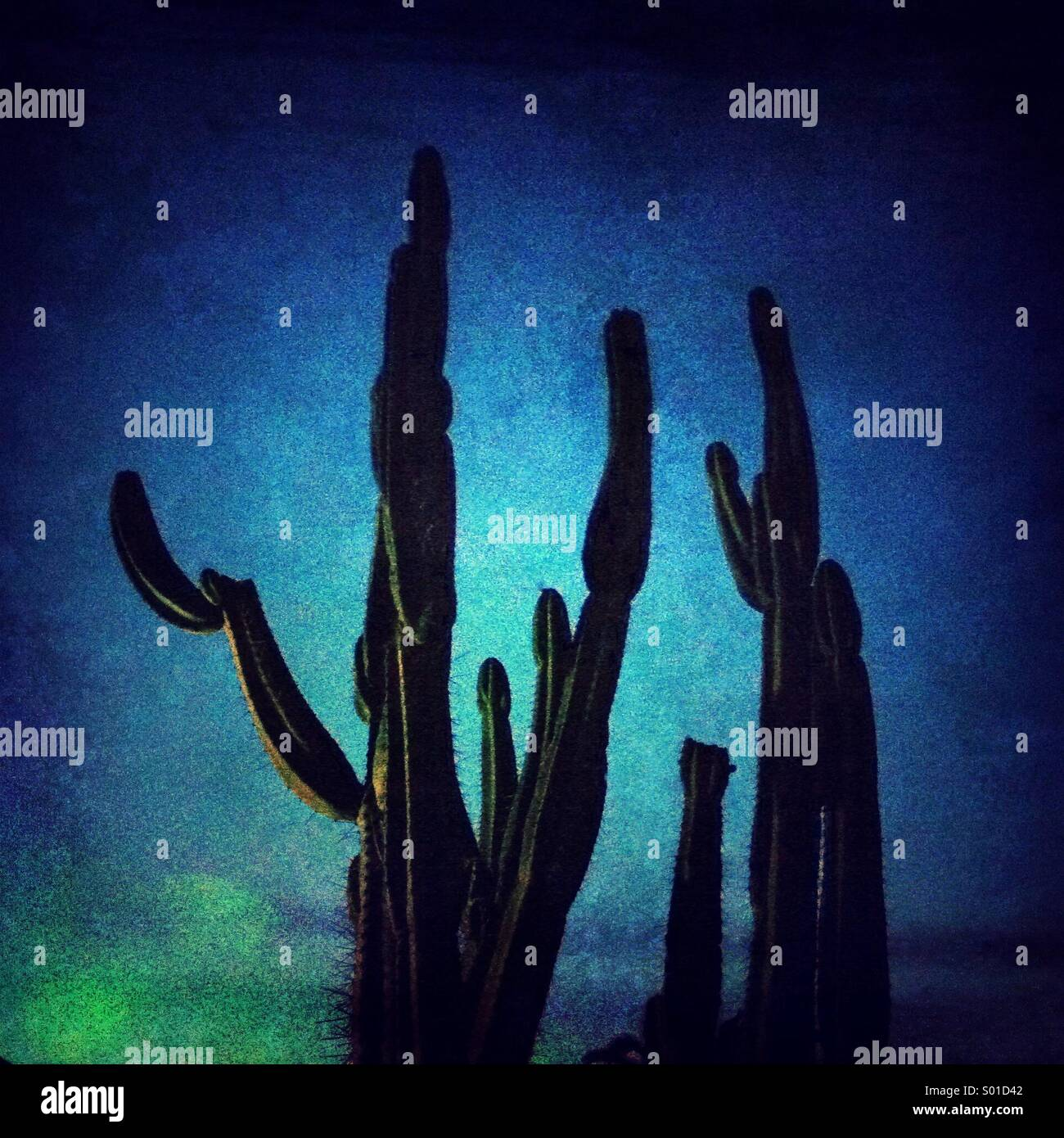 Cactus on a blue sky backgroud - Stock Image