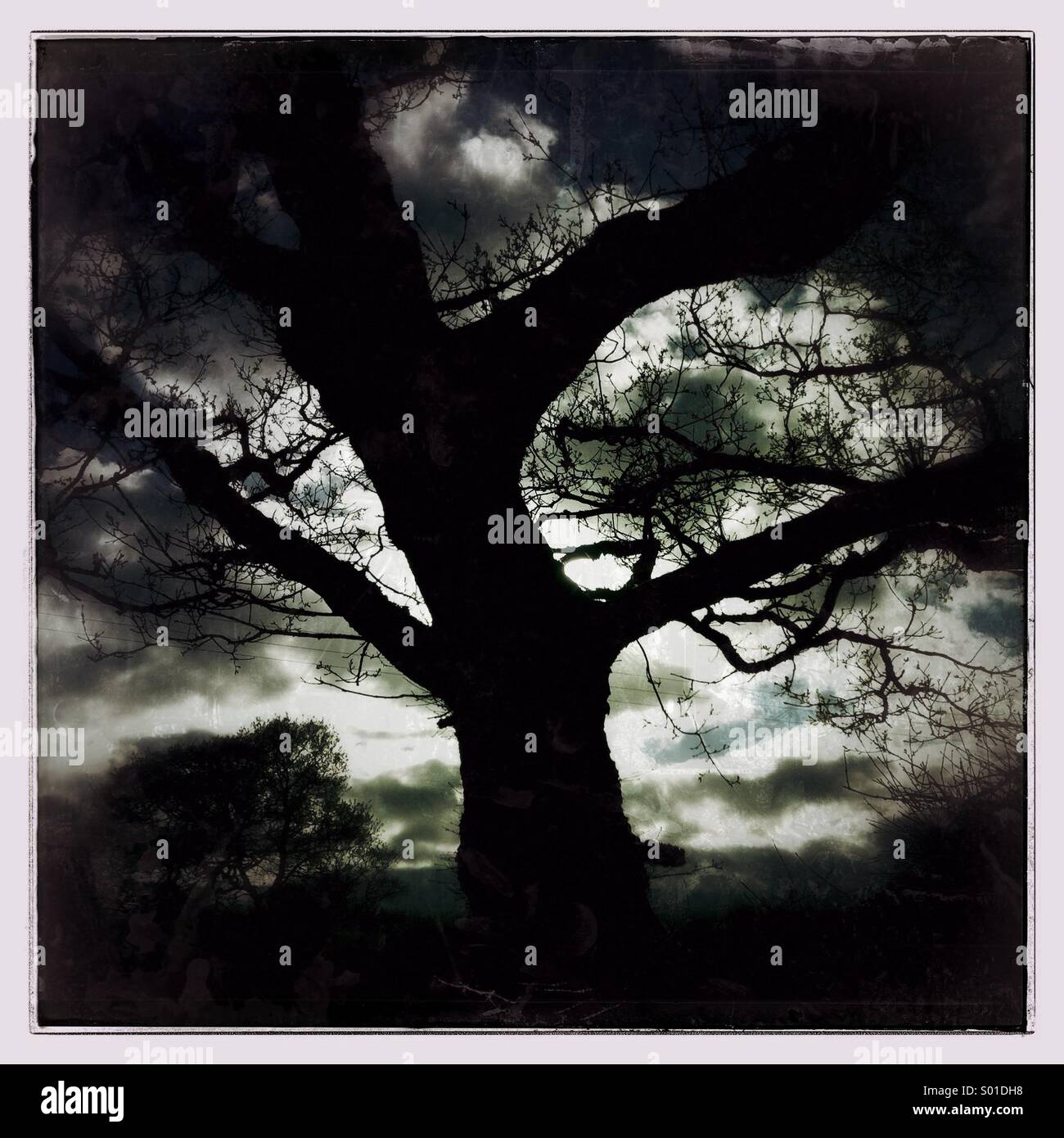 Dark moody tree against a dramatic sky - Stock Image