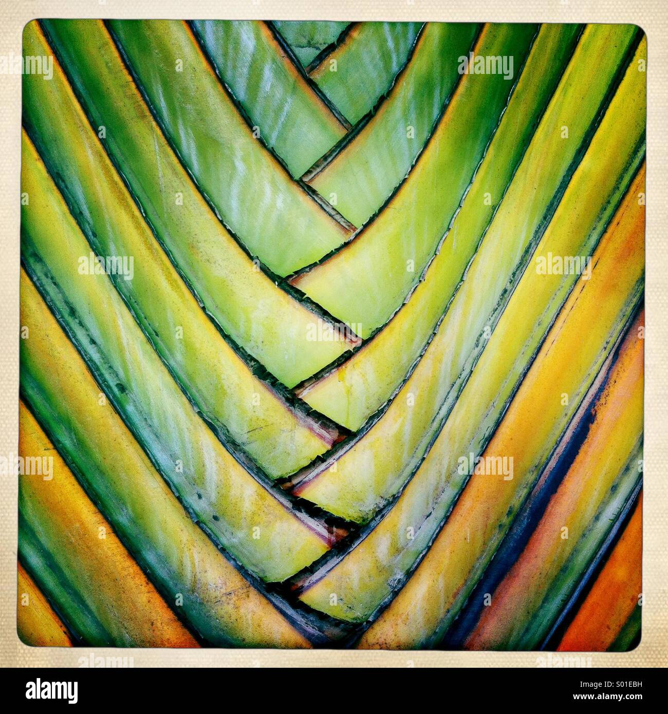 Abstract colorful details of an ornamental palm. - Stock Image