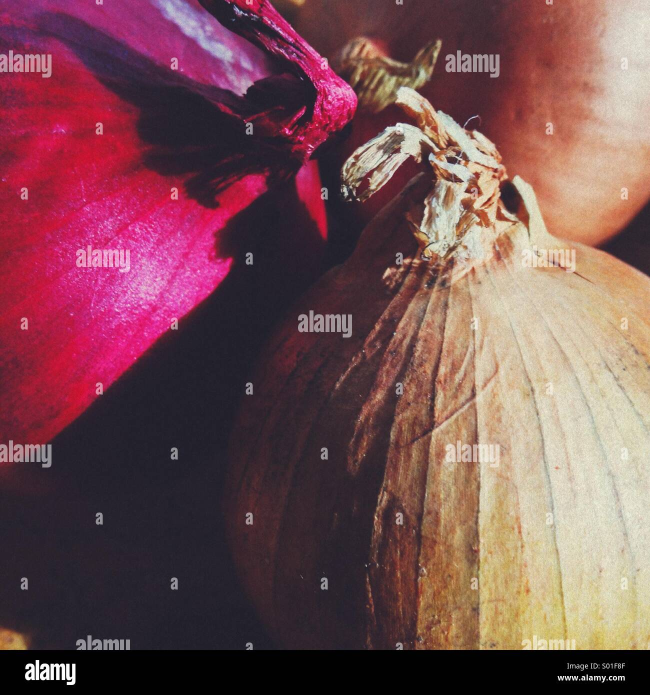 Red and White onion - Stock Image