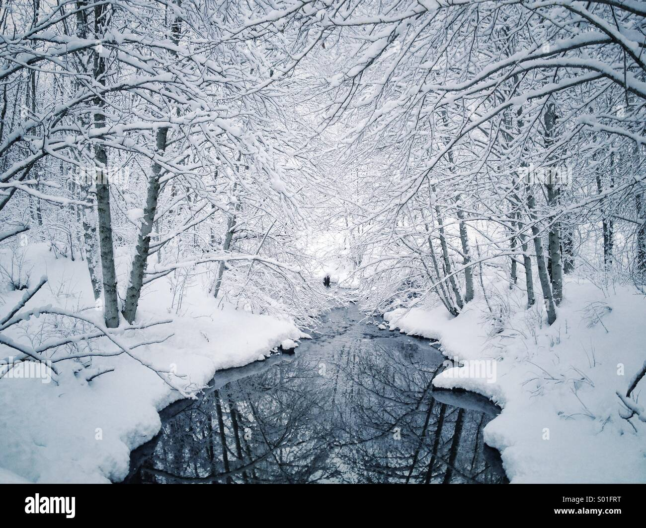 Snow covered trees along creek in winter wonderland landscape. - Stock Image