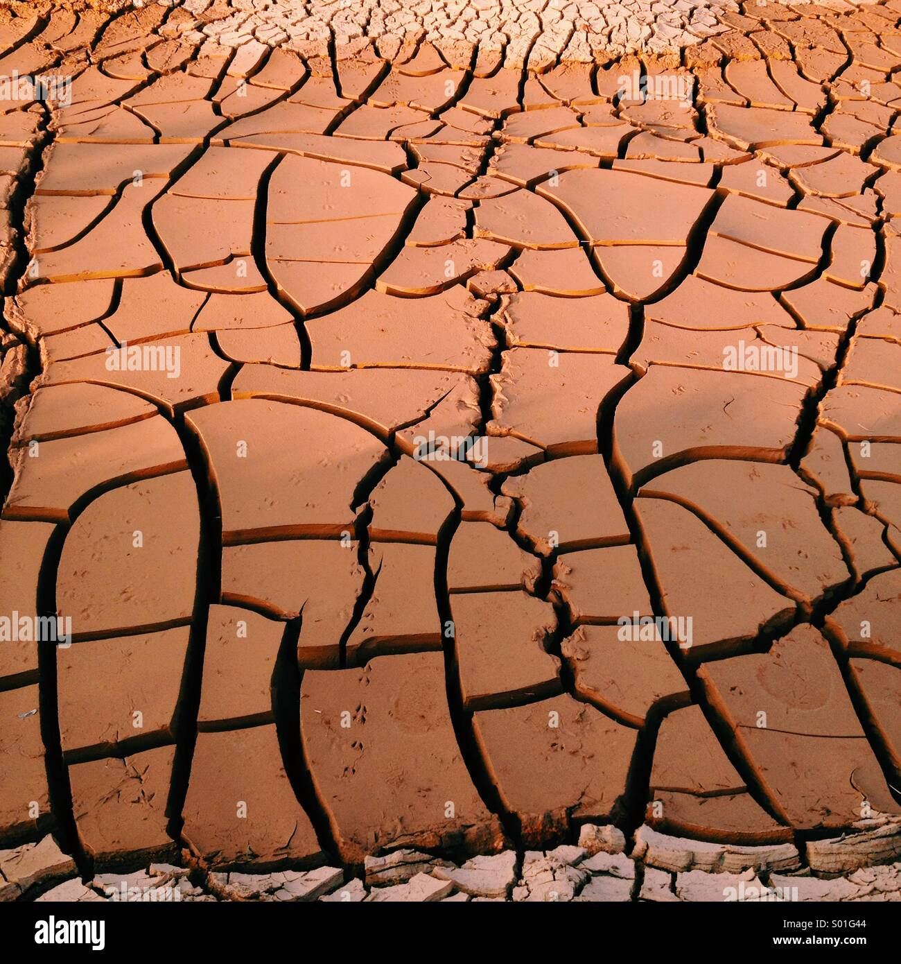 Mud cracks due to global warming - Stock Image