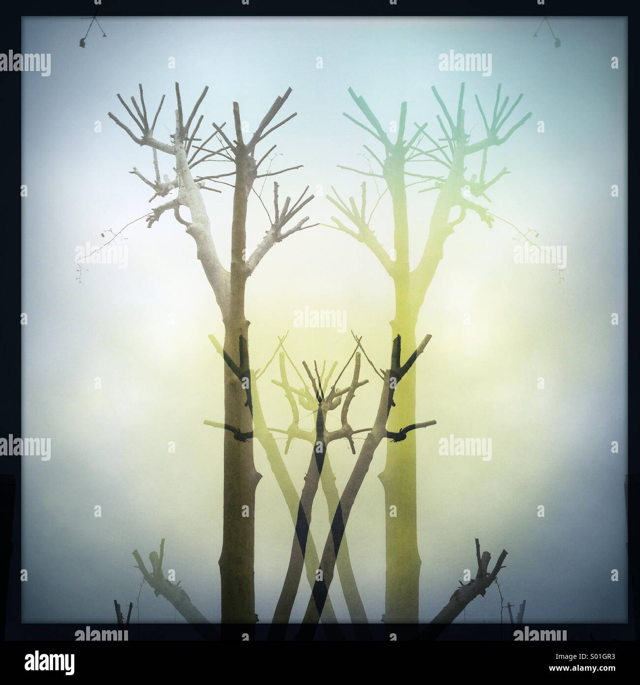 Double vision - Stock Image