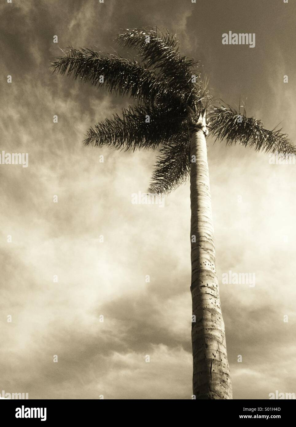 Wind in the palm tree - Stock Image