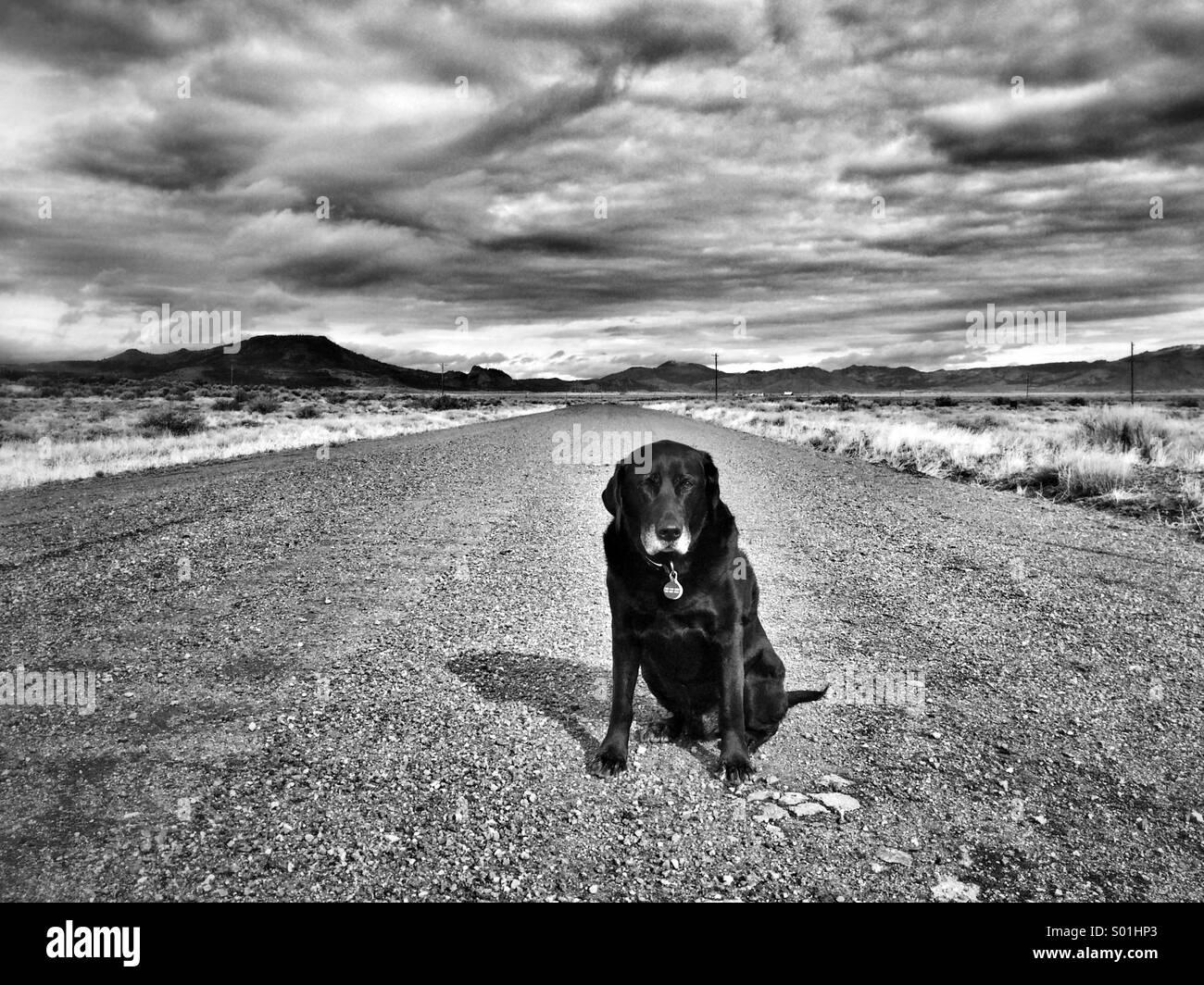 Dog road - Stock Image