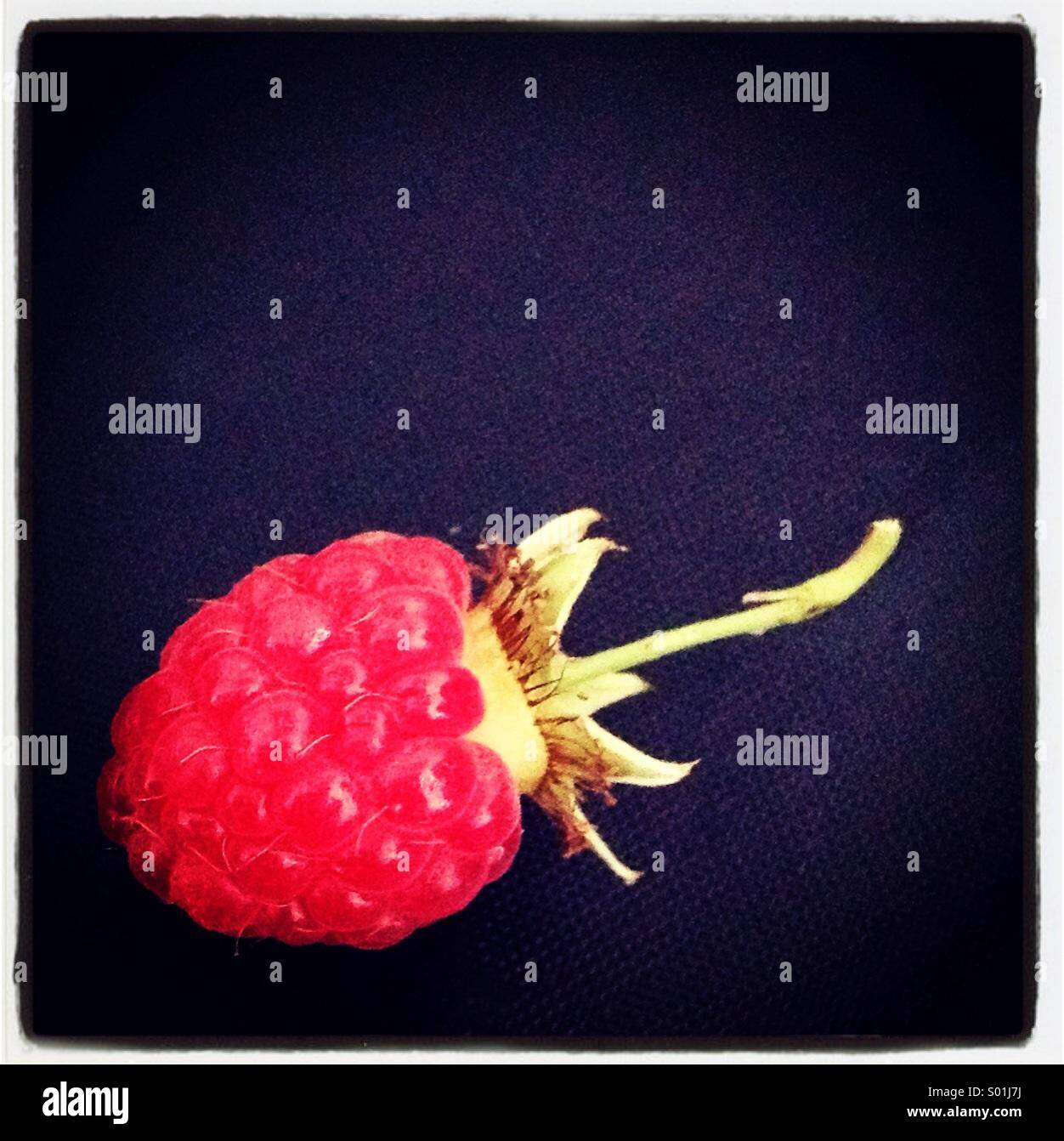 Single fresh raspberry on black background - Stock Image