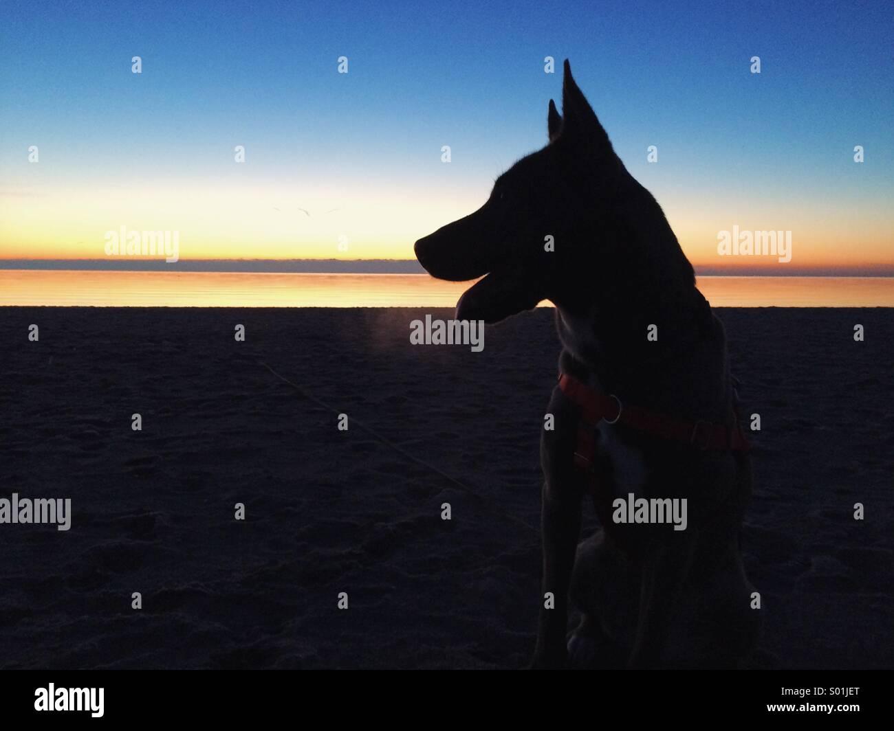 Winter morning walkies - Stock Image