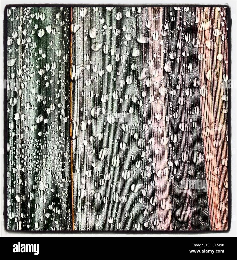 Rain drops on green striped leaf - Stock Image