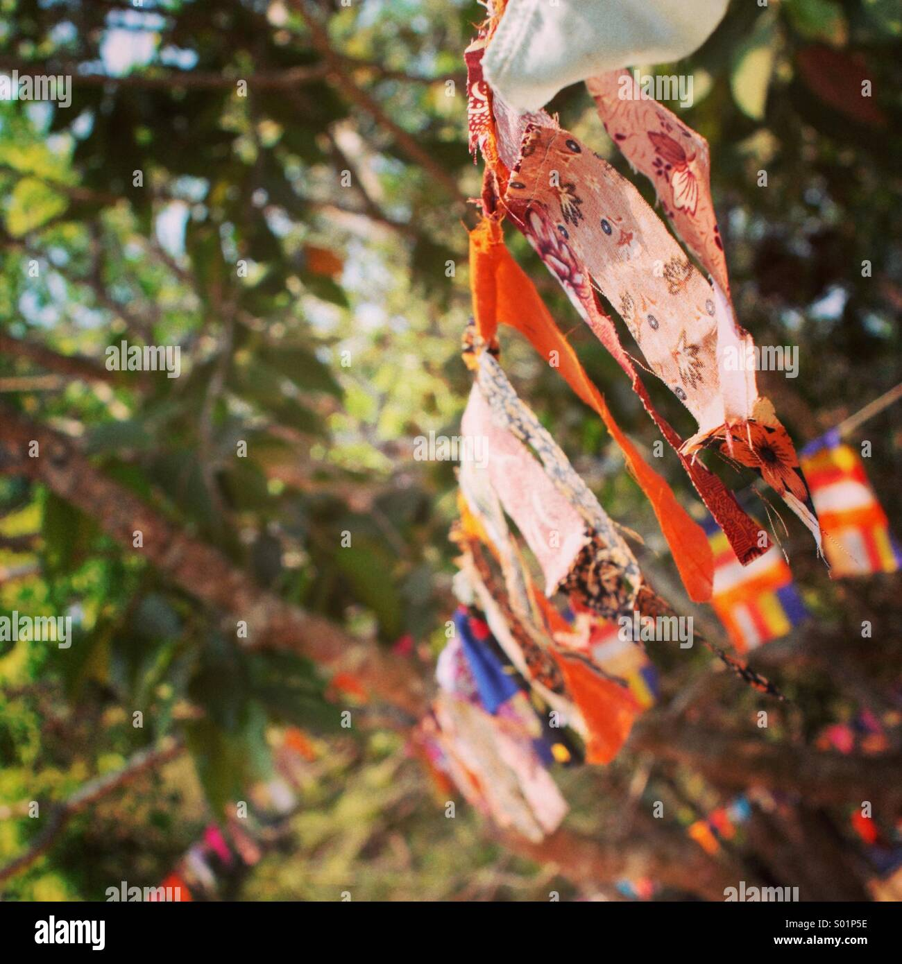 Buddhist prayer flags against a green tree background in Cambodia - Stock Image