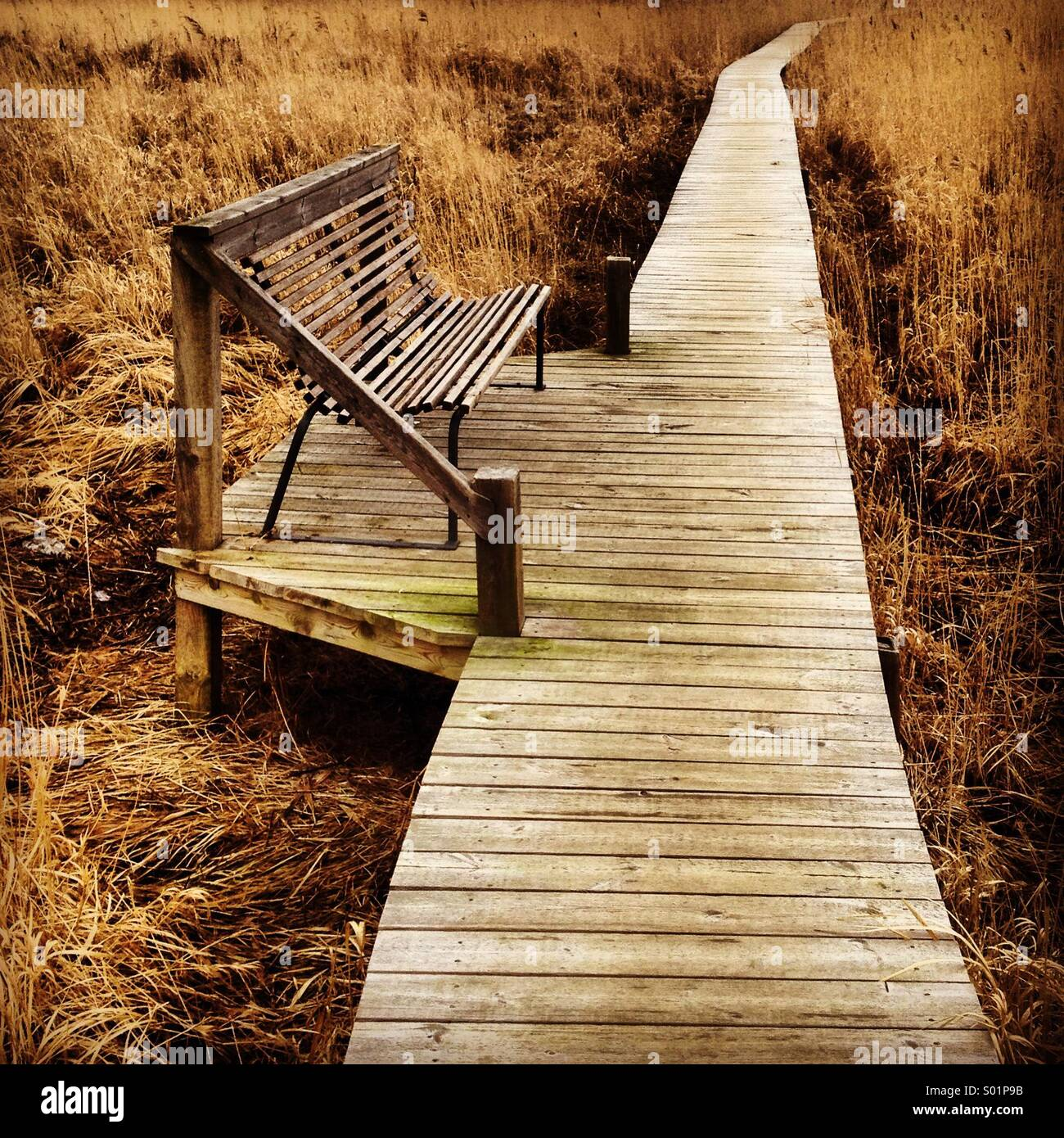 A single empty bench on a walkway over seaside reeds in Scandinavia - Stock Image