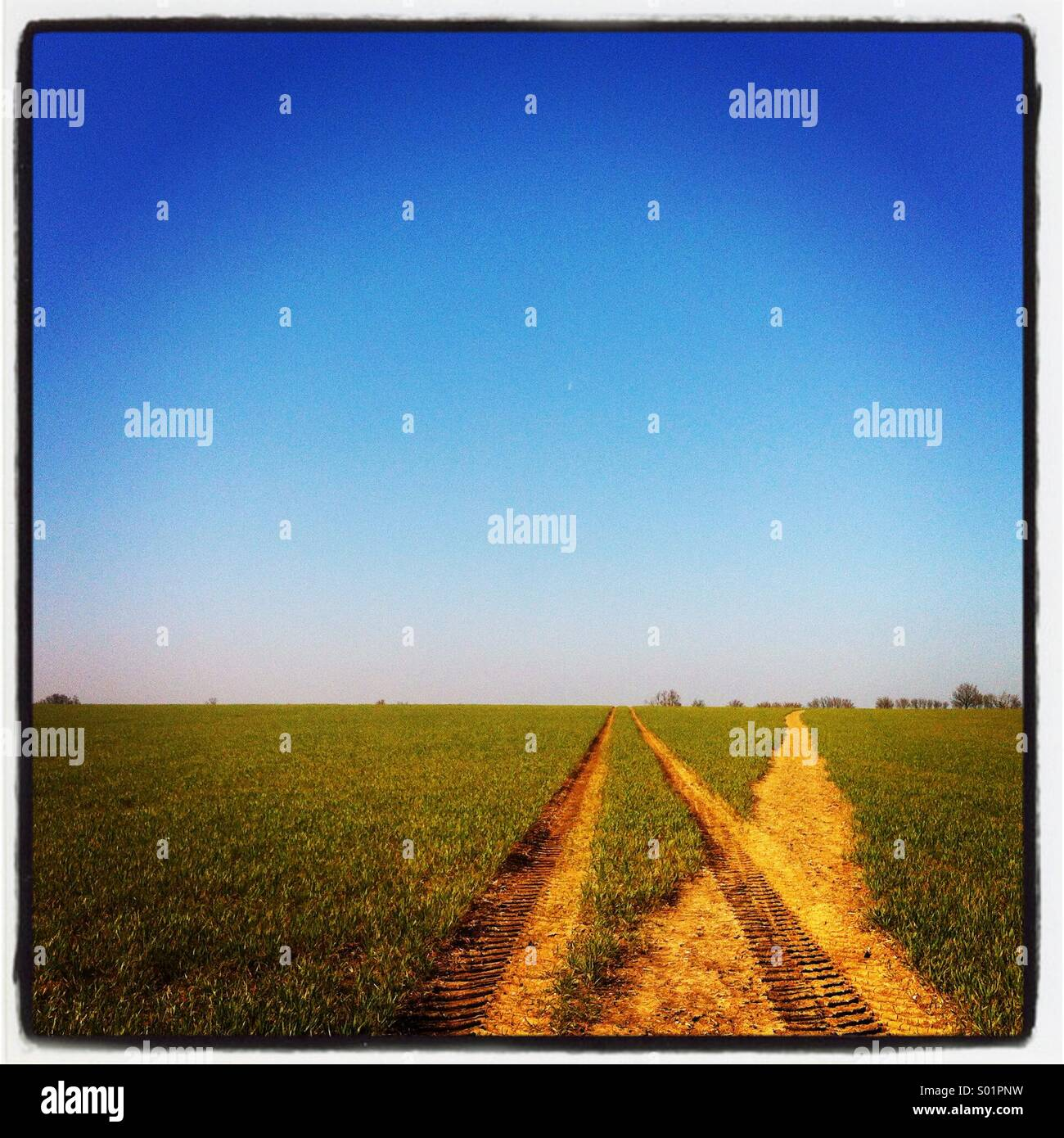 Tracks through a green field in Willingale, Essex, with clear blue sky above. - Stock Image