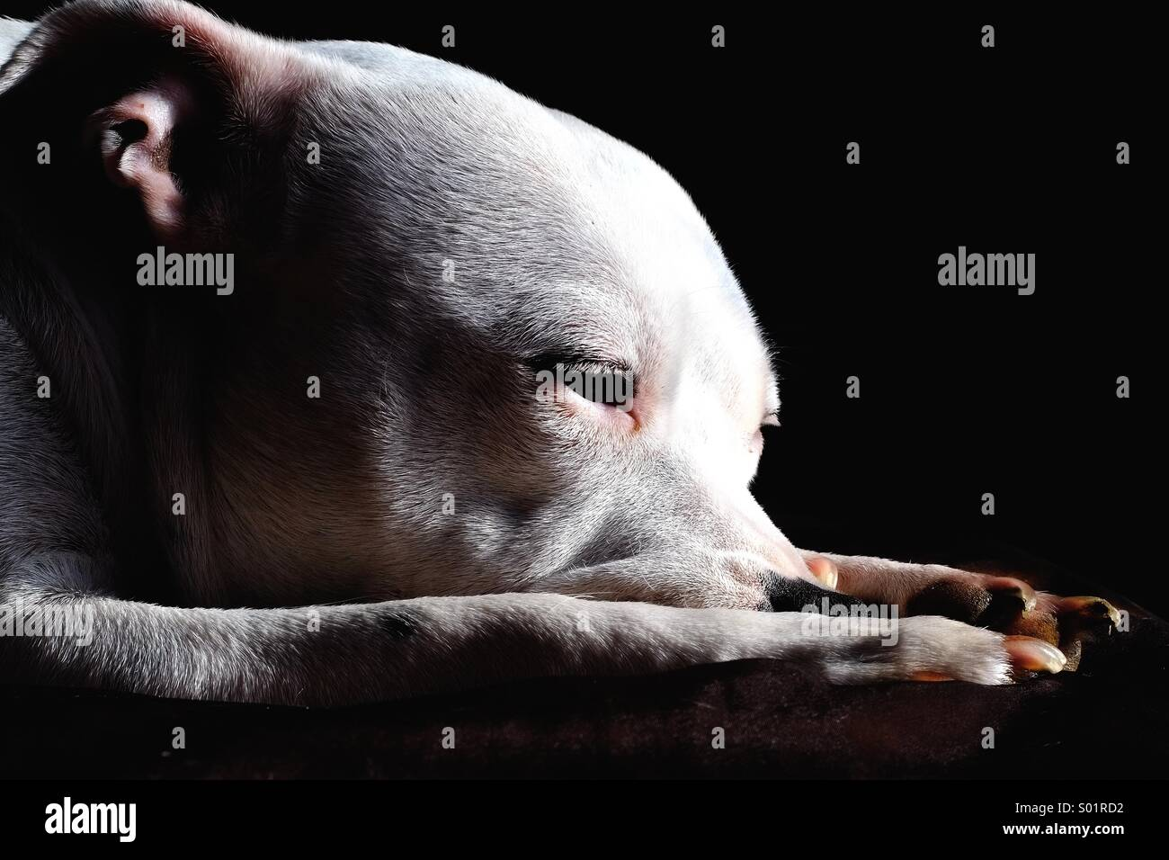 Dog portrait - Stock Image
