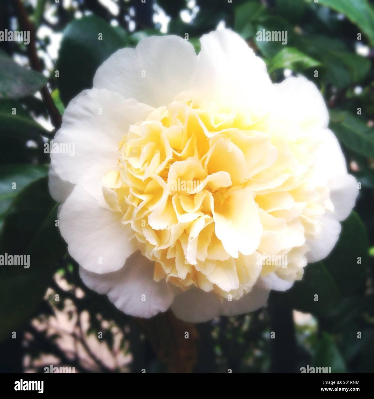 White flower - Stock Image