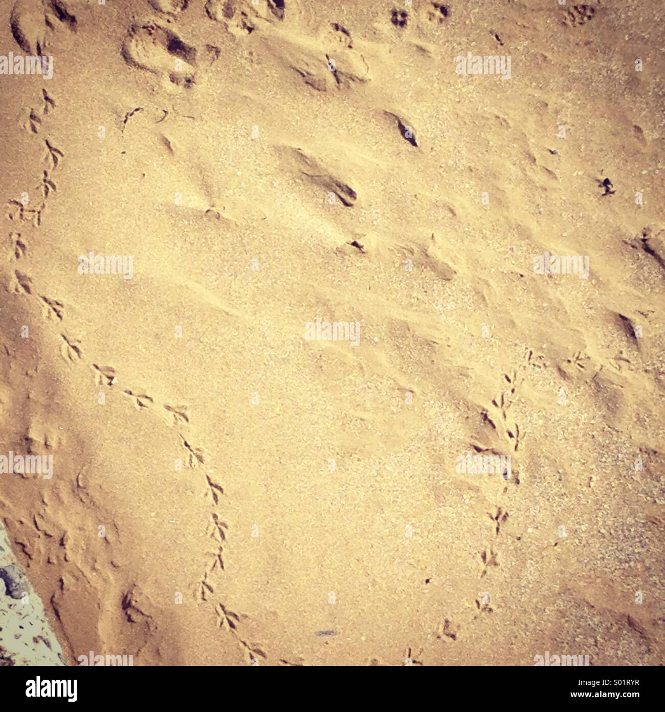 Bird footprints in the sand Stock Photo