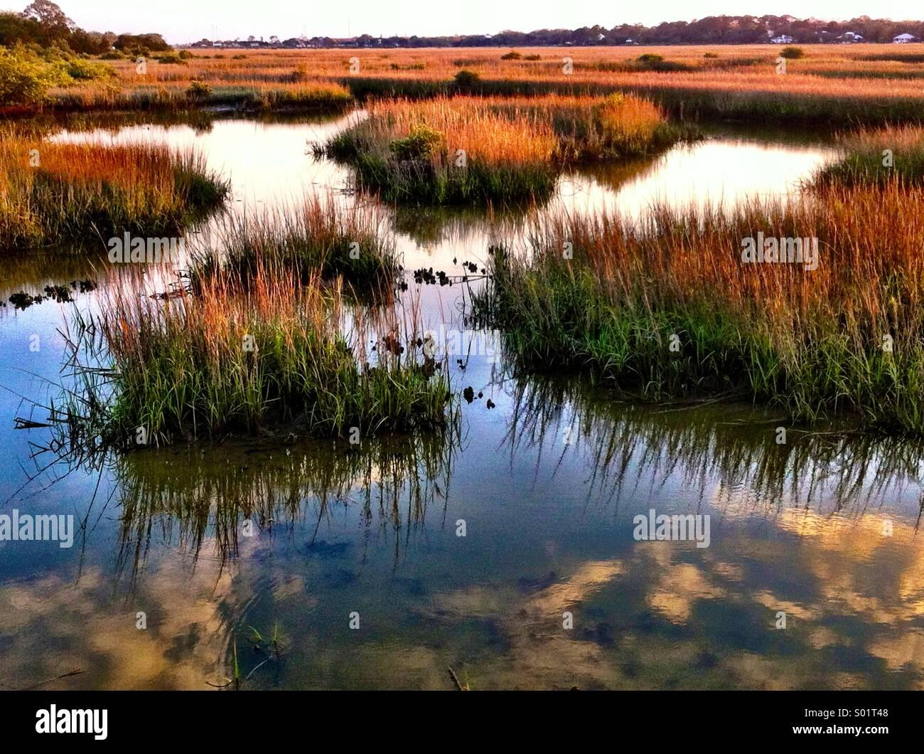 Salt marsh - Stock Image