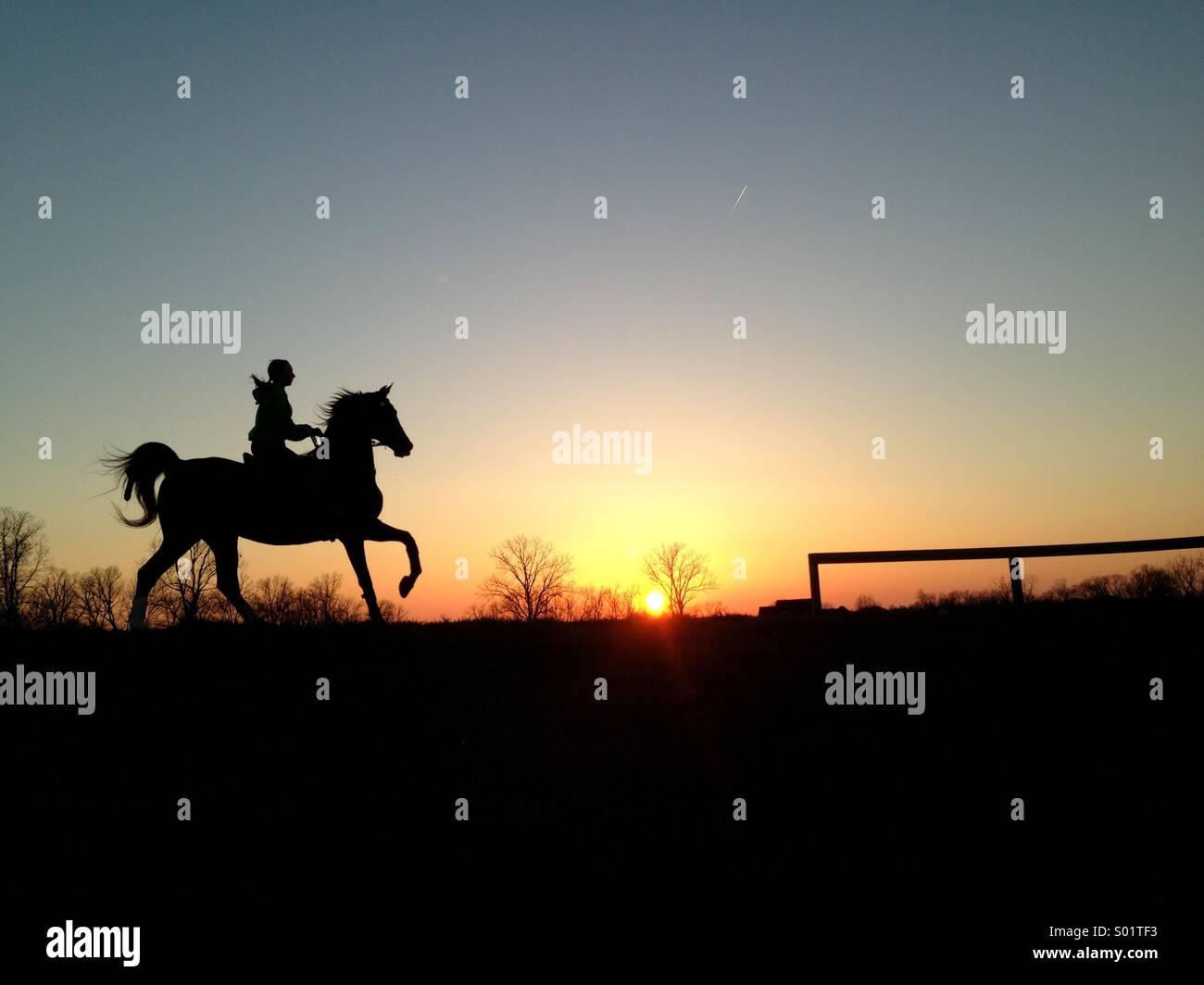 Girl riding saddlebred horse in sunset - Stock Image