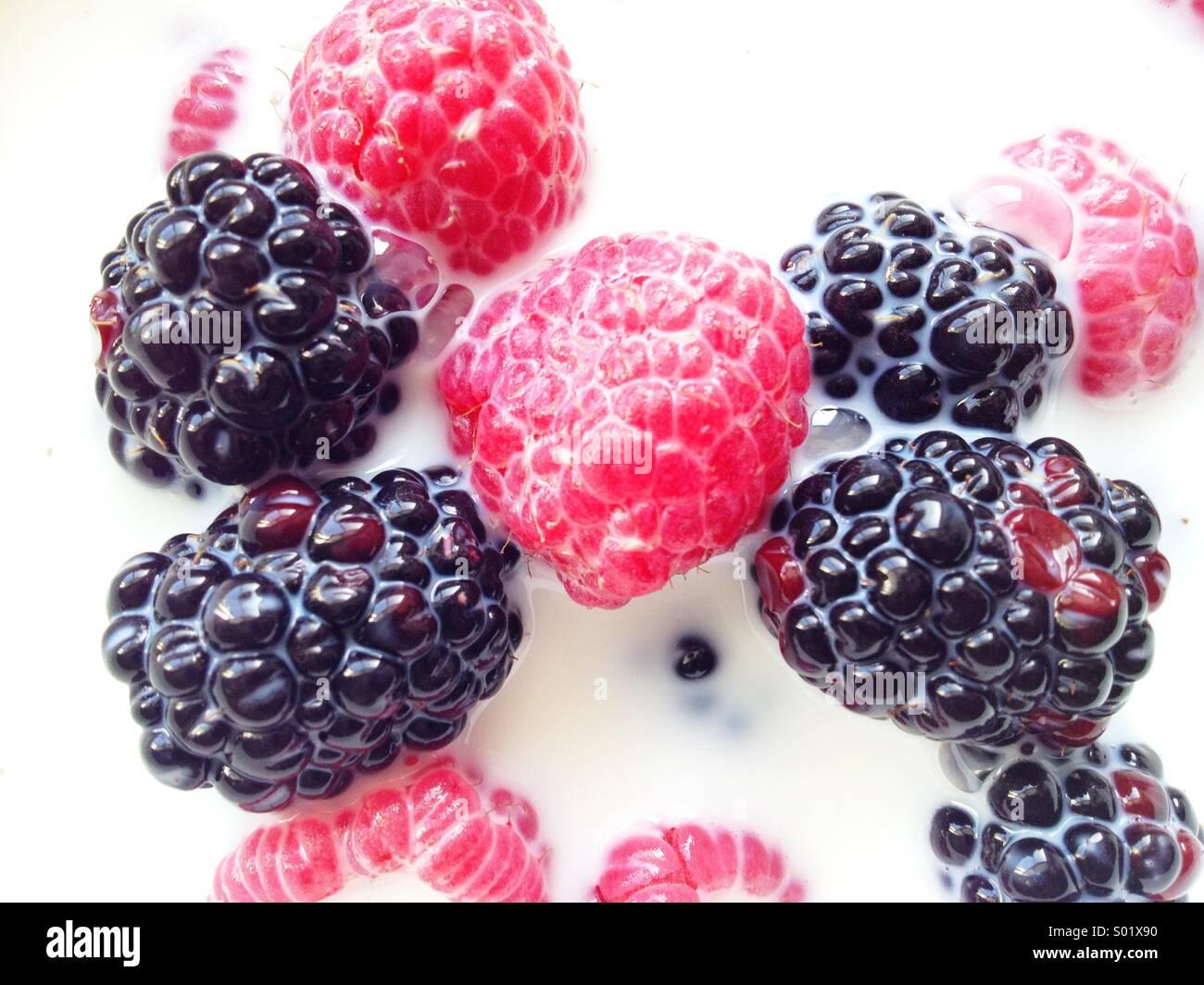 Berries in Milk - Stock Image
