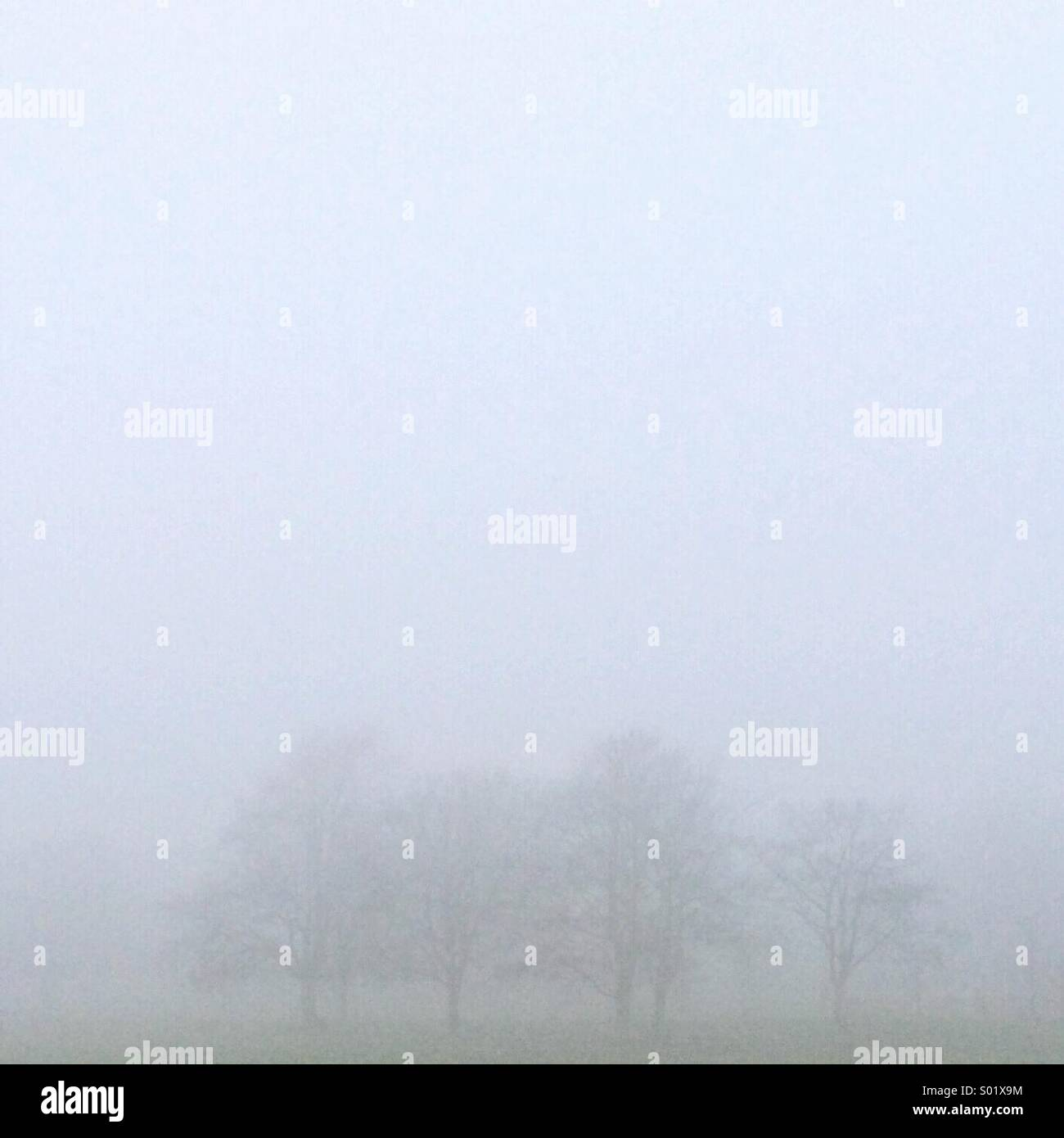Foggy Trees - Stock Image