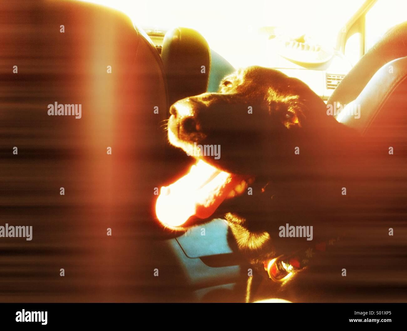 Happy dog - Stock Image