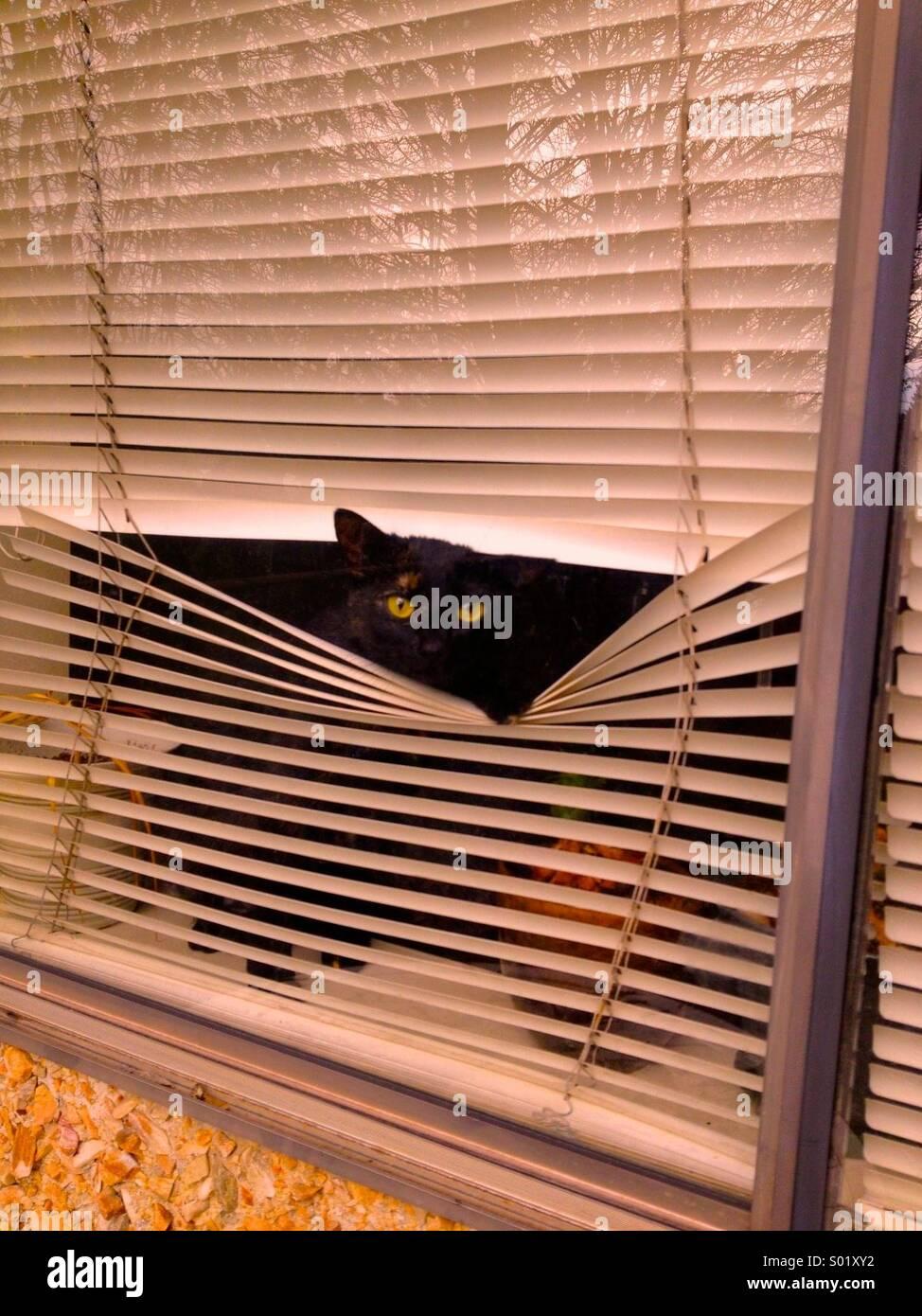 Security cat - Stock Image