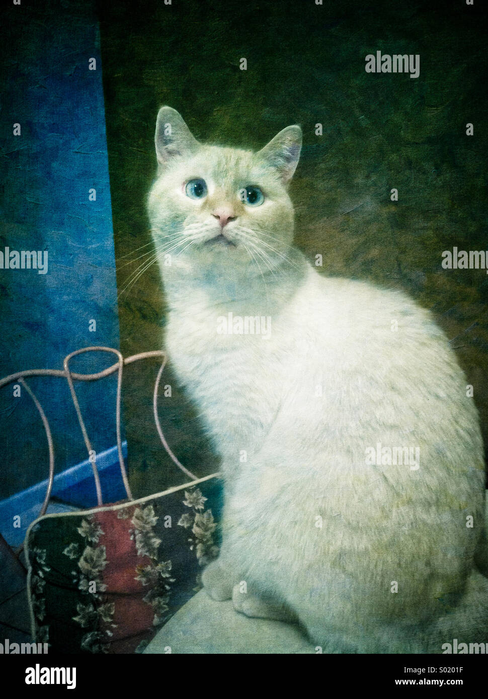An artistic rendering of a white flame point Siamese cat - Stock Image