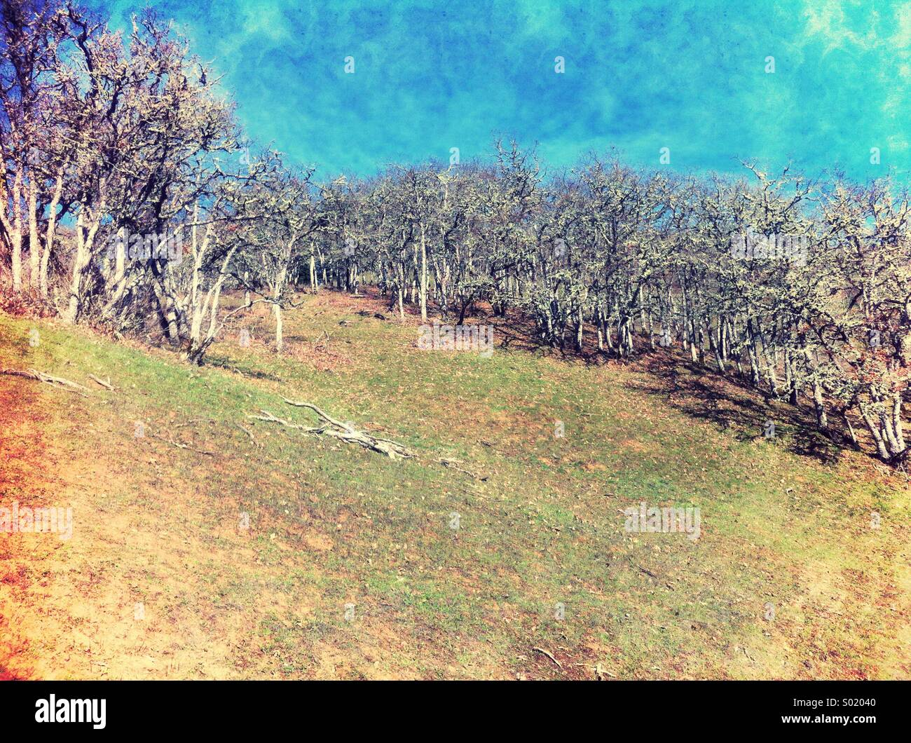 Hillside with trees - Stock Image
