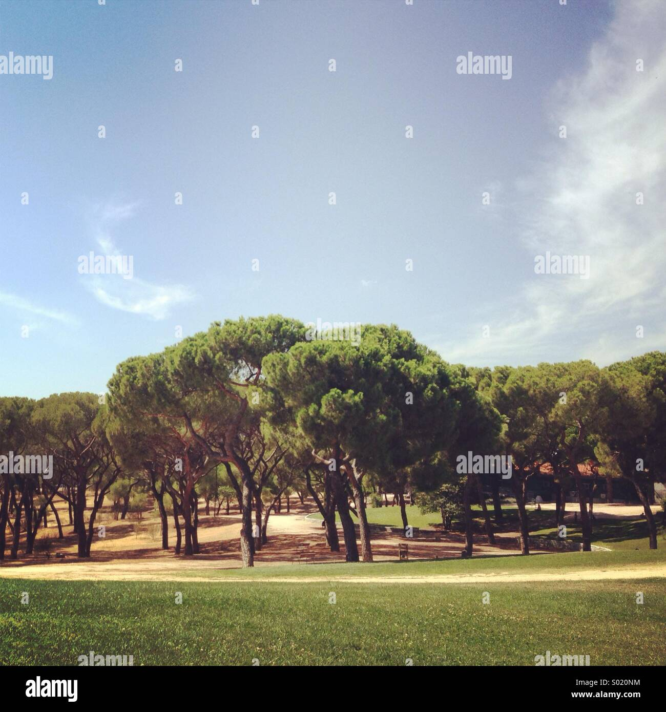 Tree landscape in a sunny day - Stock Image
