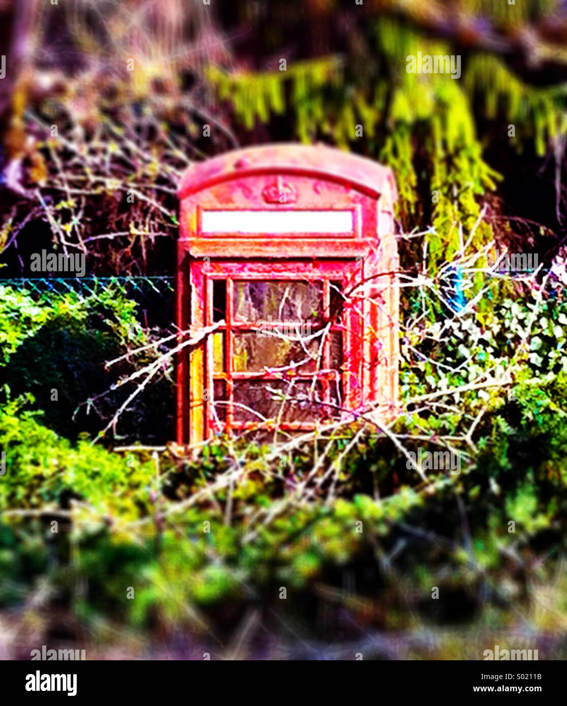Old British phone box, now abandoned and overgrown - Stock Image