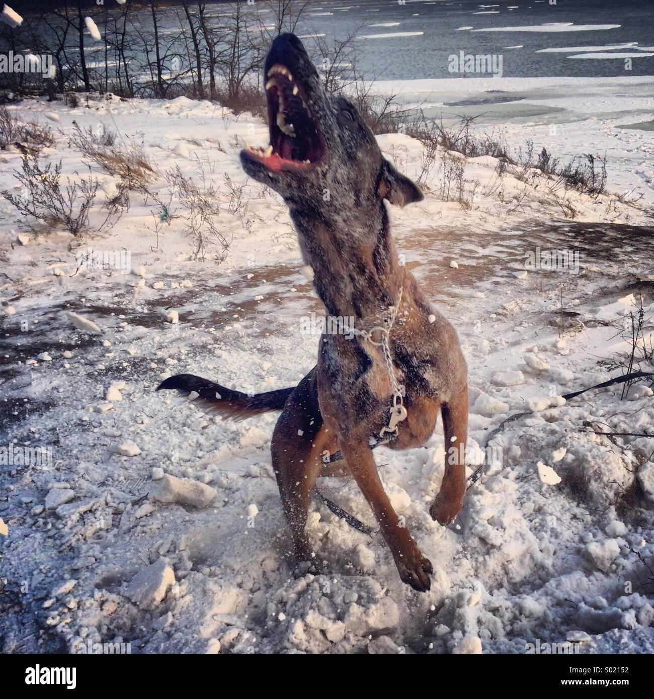 dog's winter fun - Stock Image