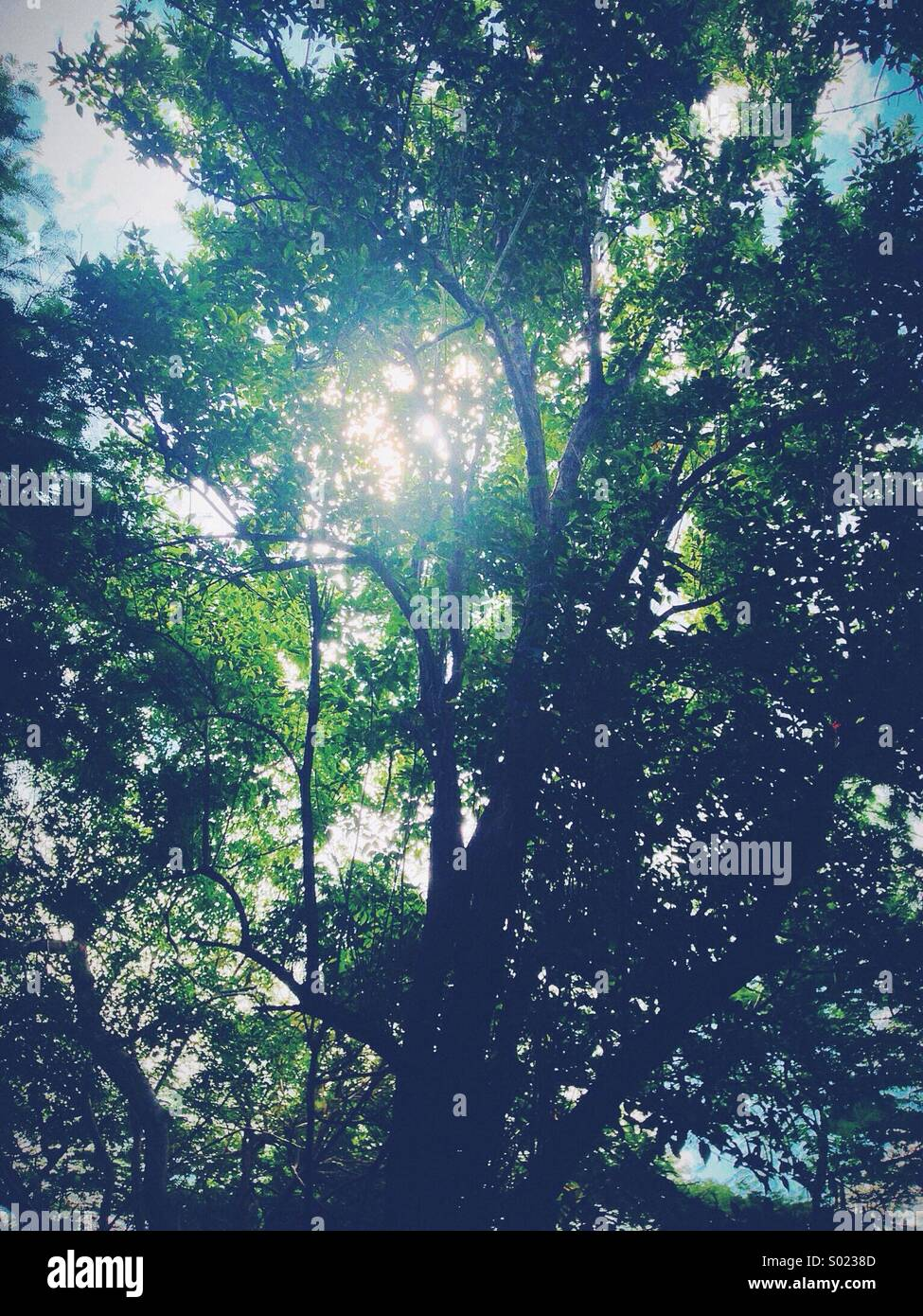 Forest. Barbados, St Lucy. - Stock Image