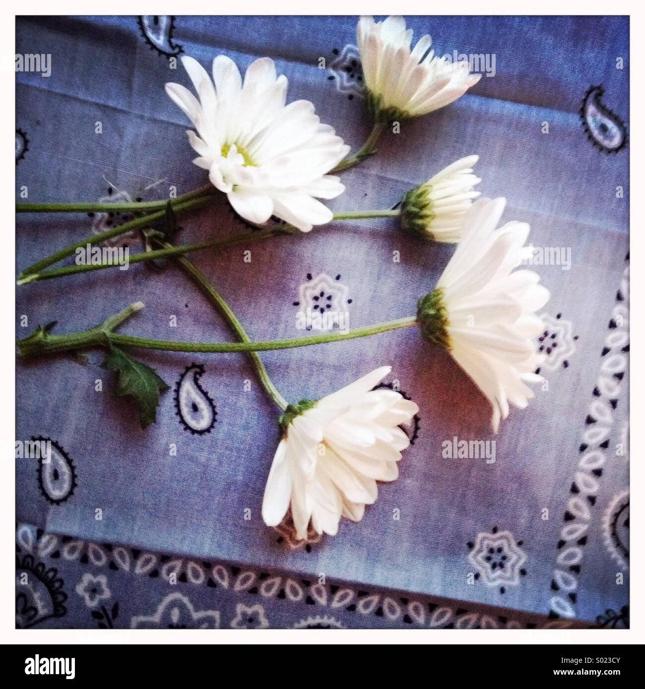 Flowers on Blue Bandana - Stock Image