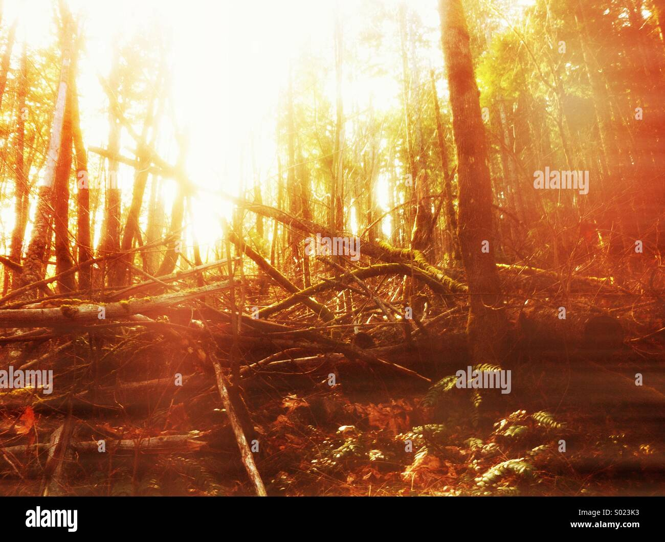 Bright scene in forest at sunset - Stock Image