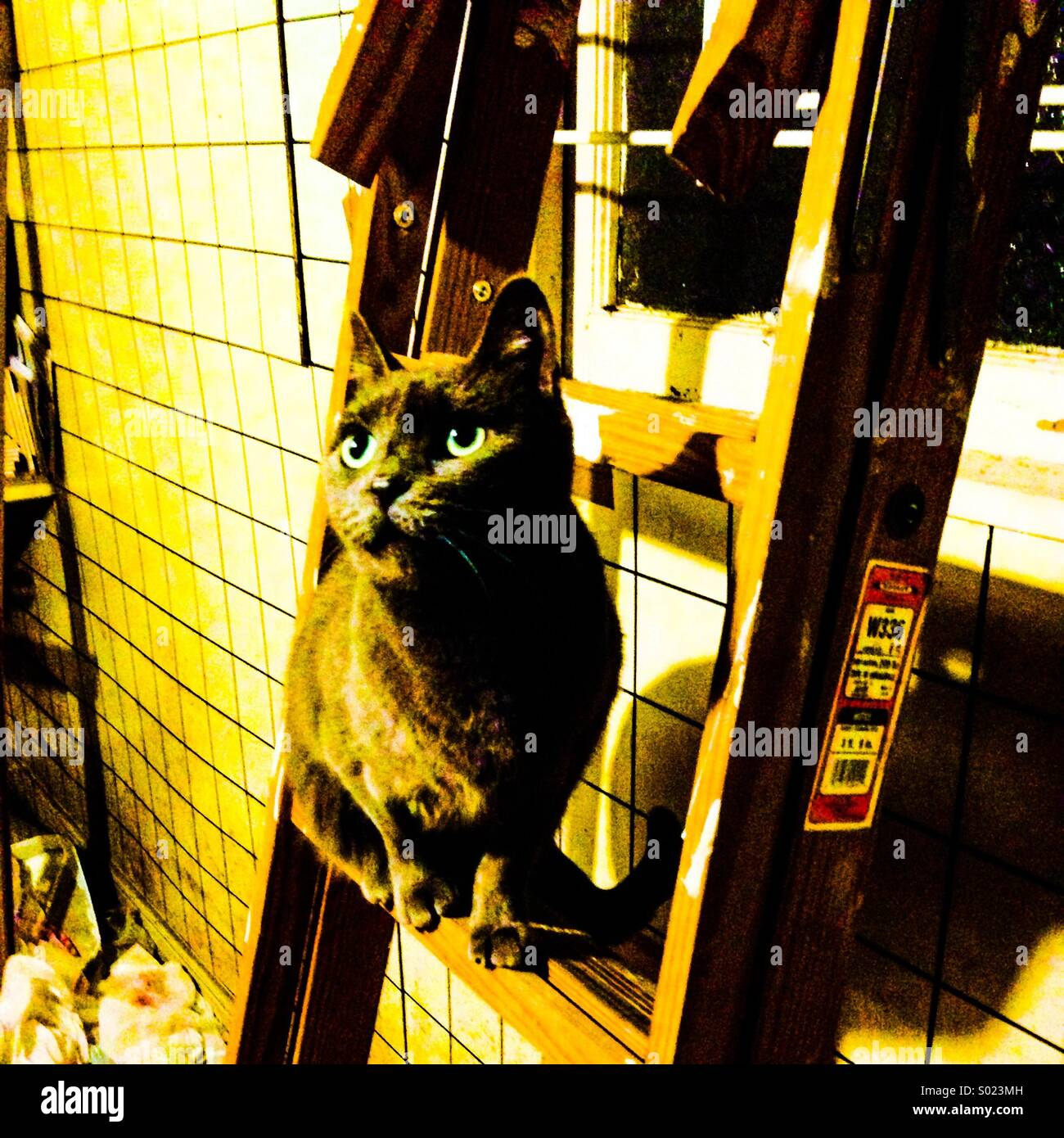 Cat on a ladder. - Stock Image