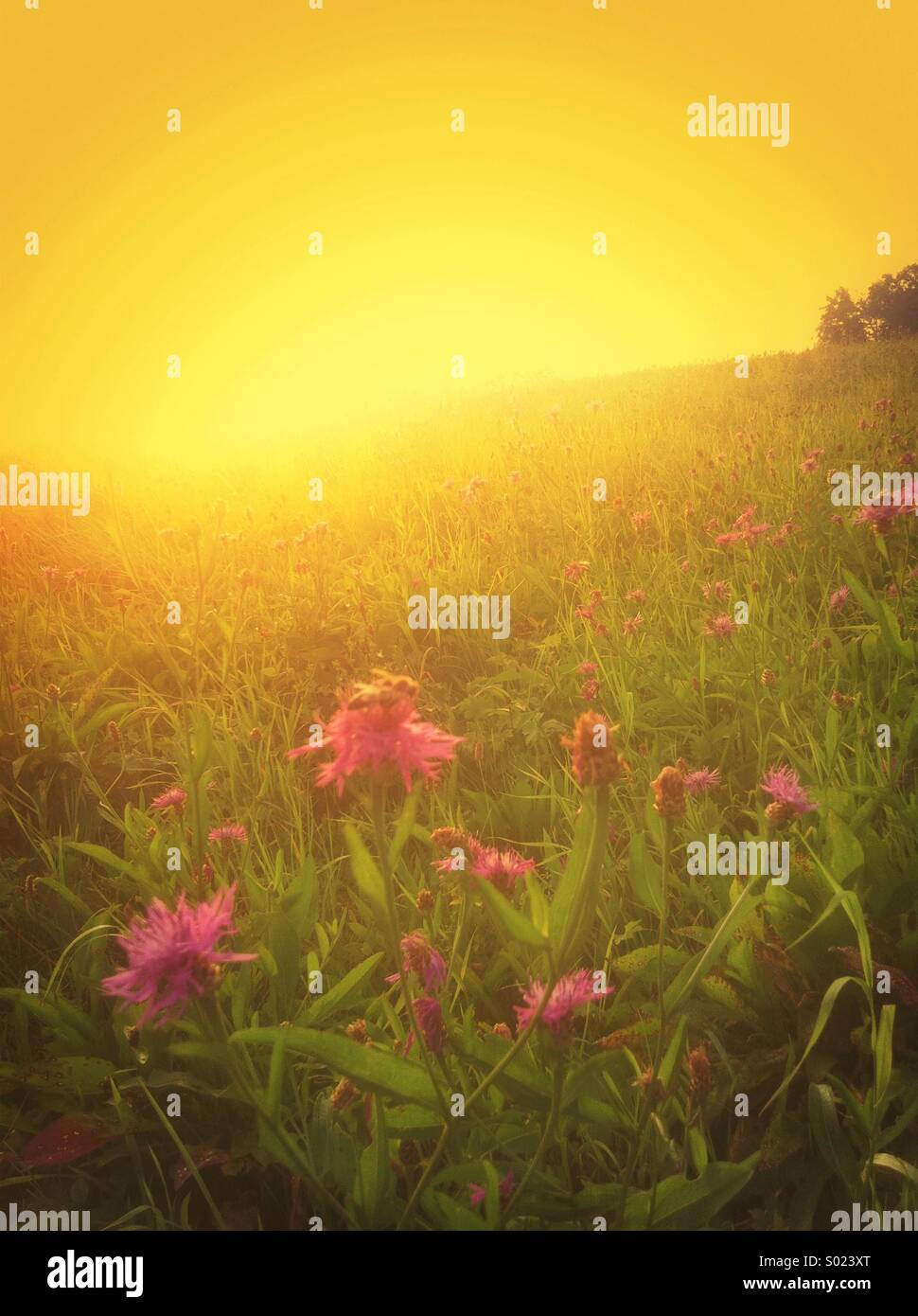 Sun rays over a meadow - Stock Image