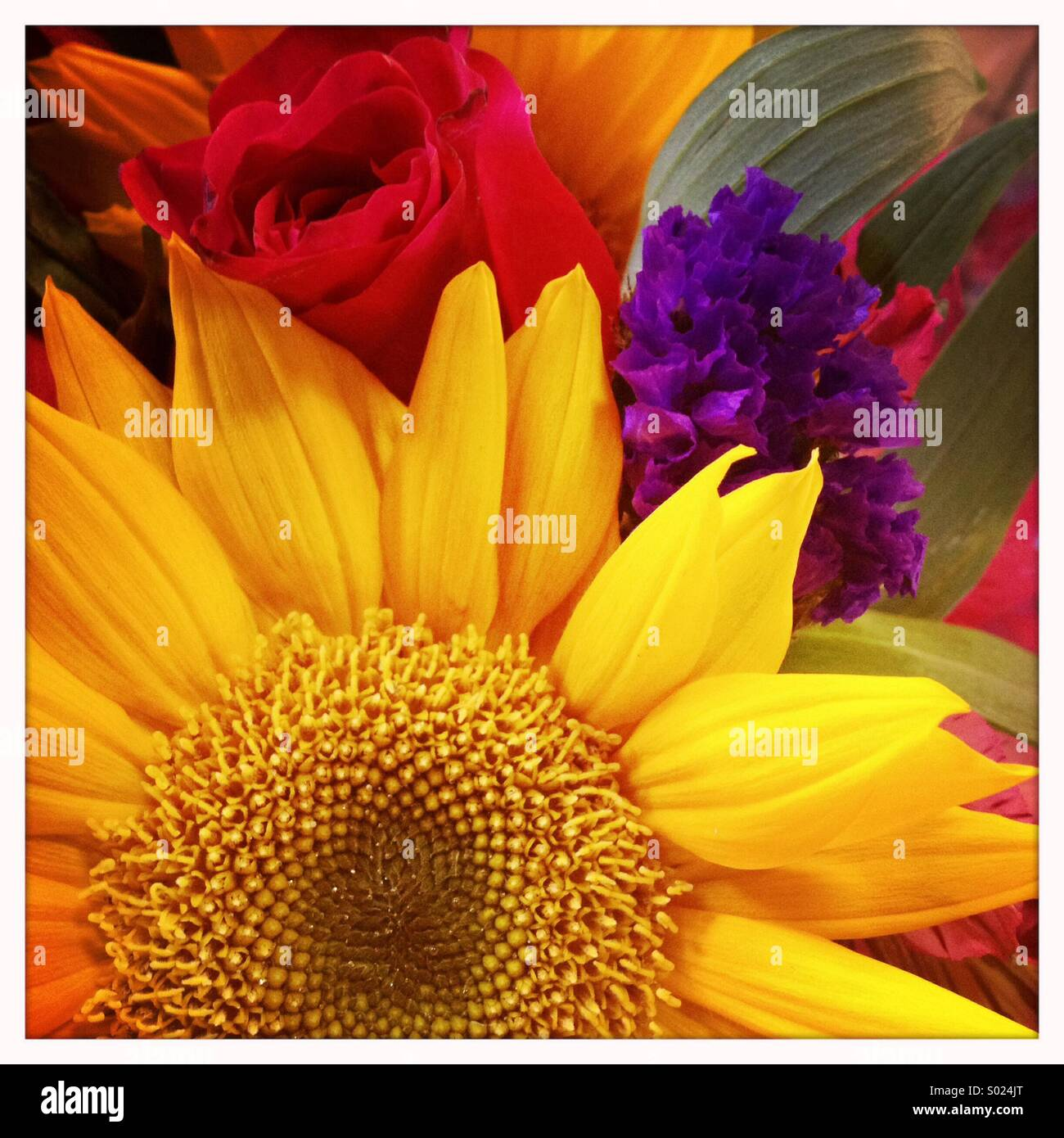 Sunflower Bouquet - Stock Image