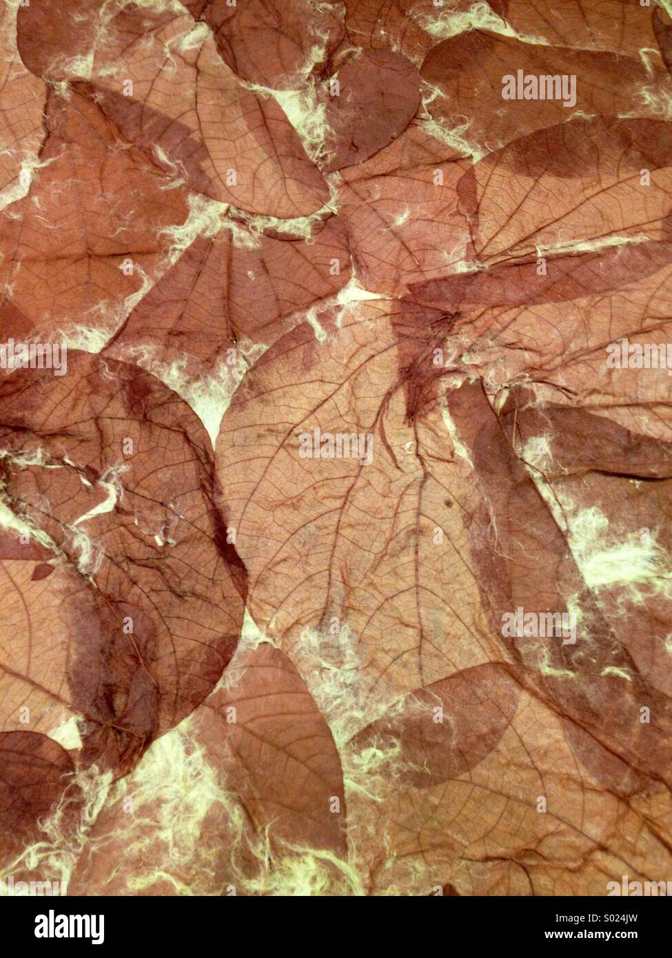 Dried leaves - Stock Image