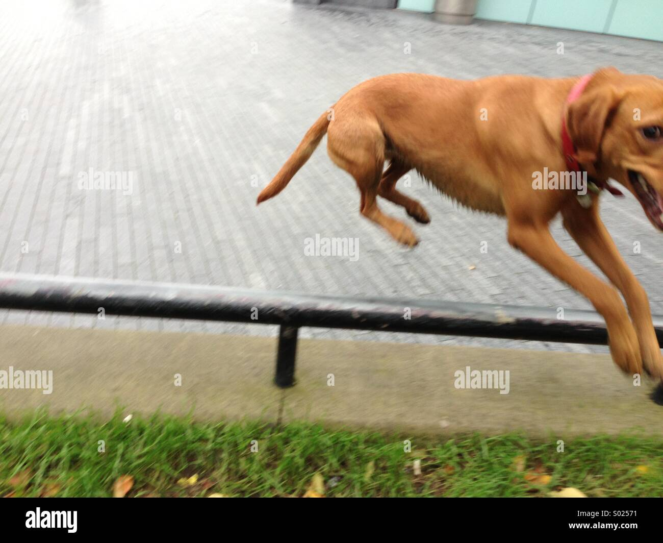 Leaping dog - Stock Image