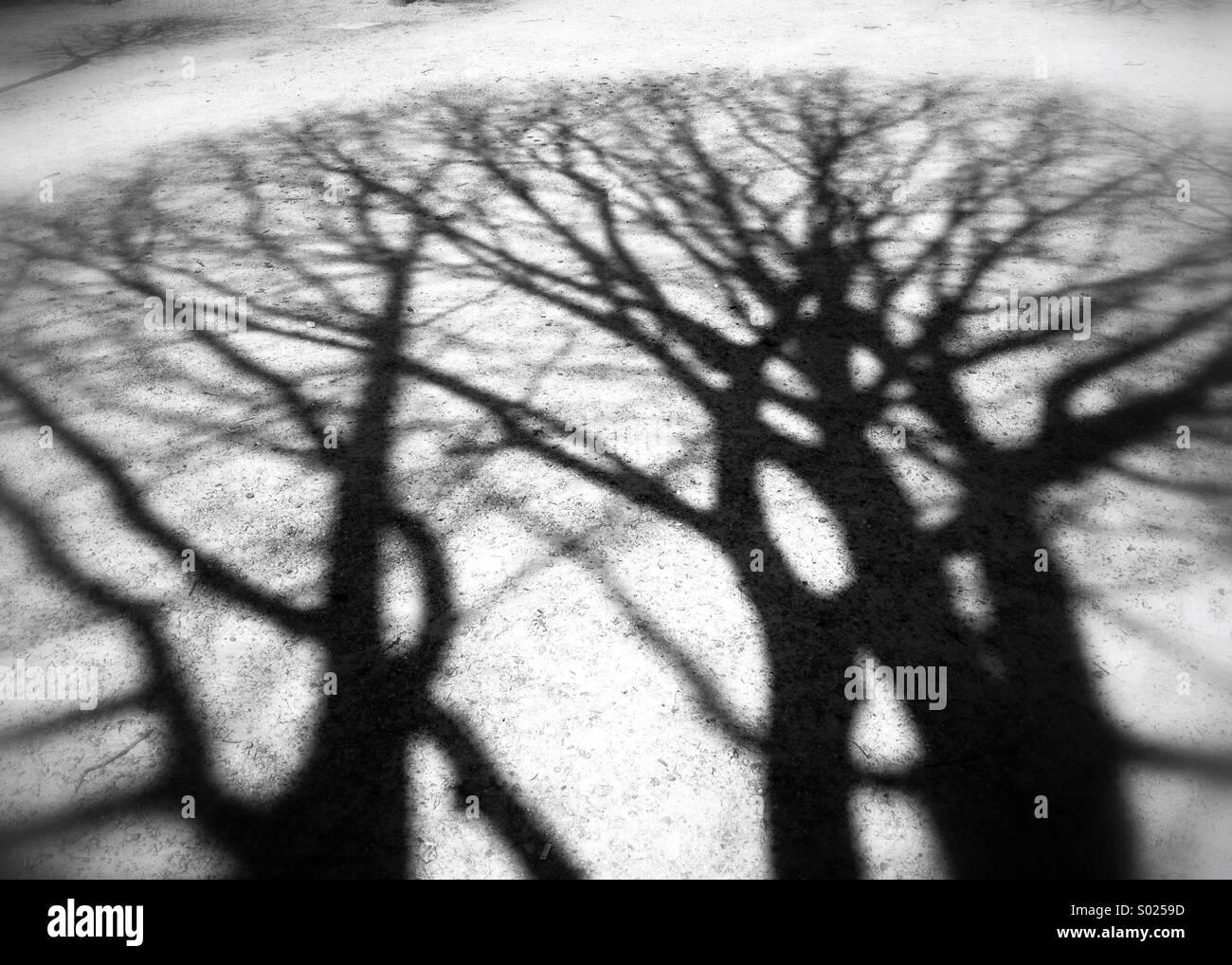 Shadows of brashes, trees shadows - Stock Image