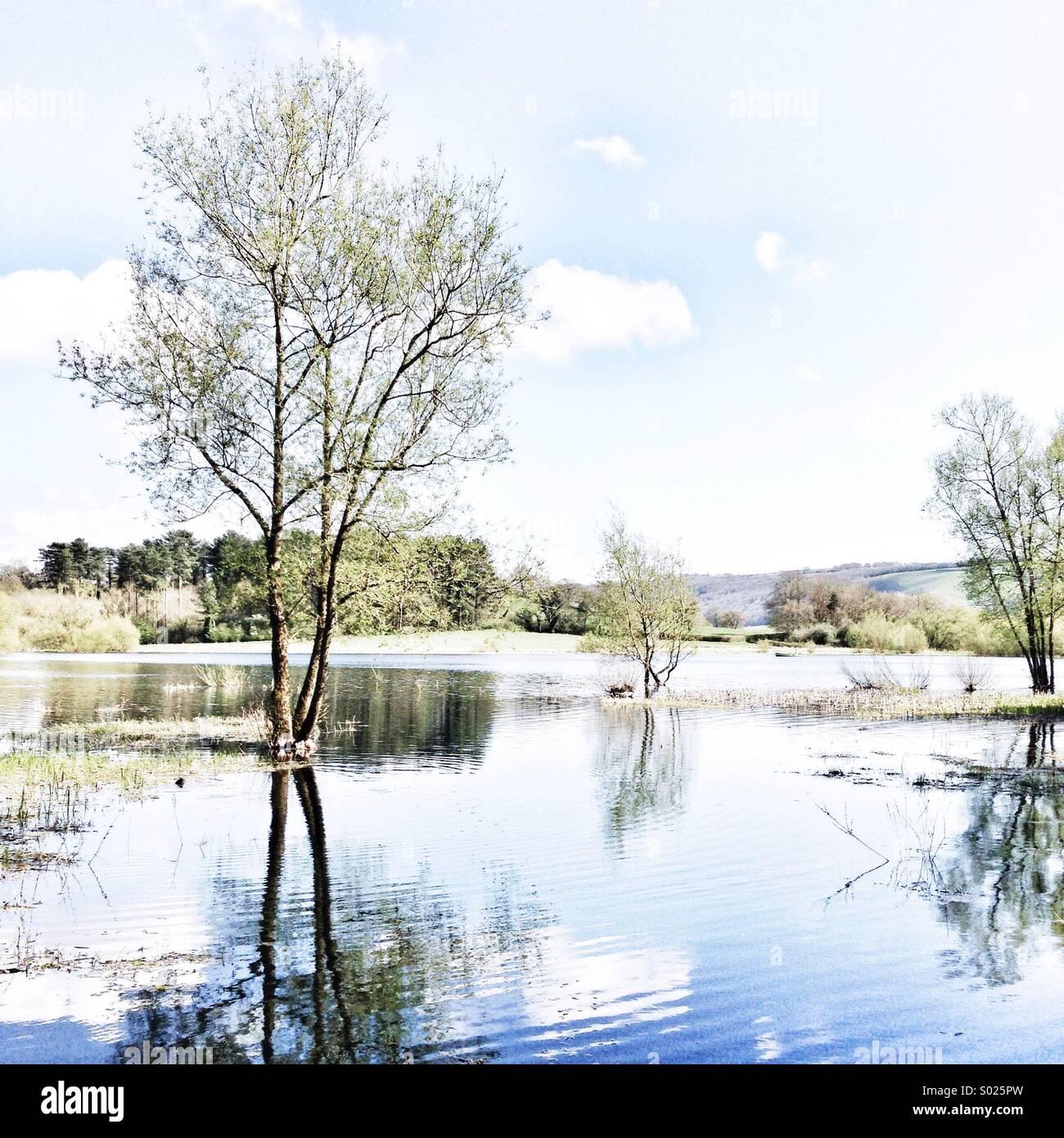 Flooded trees of Blagdon lake - Stock Image