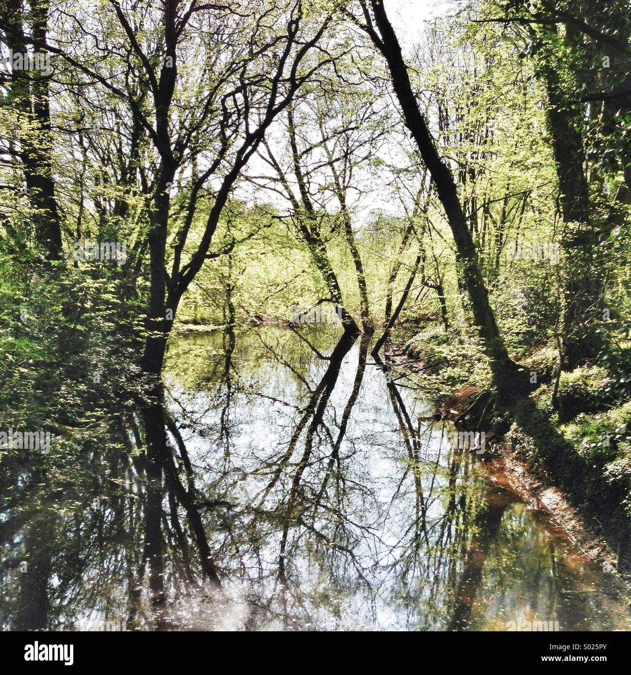 Trees reflected in creek - Stock Image