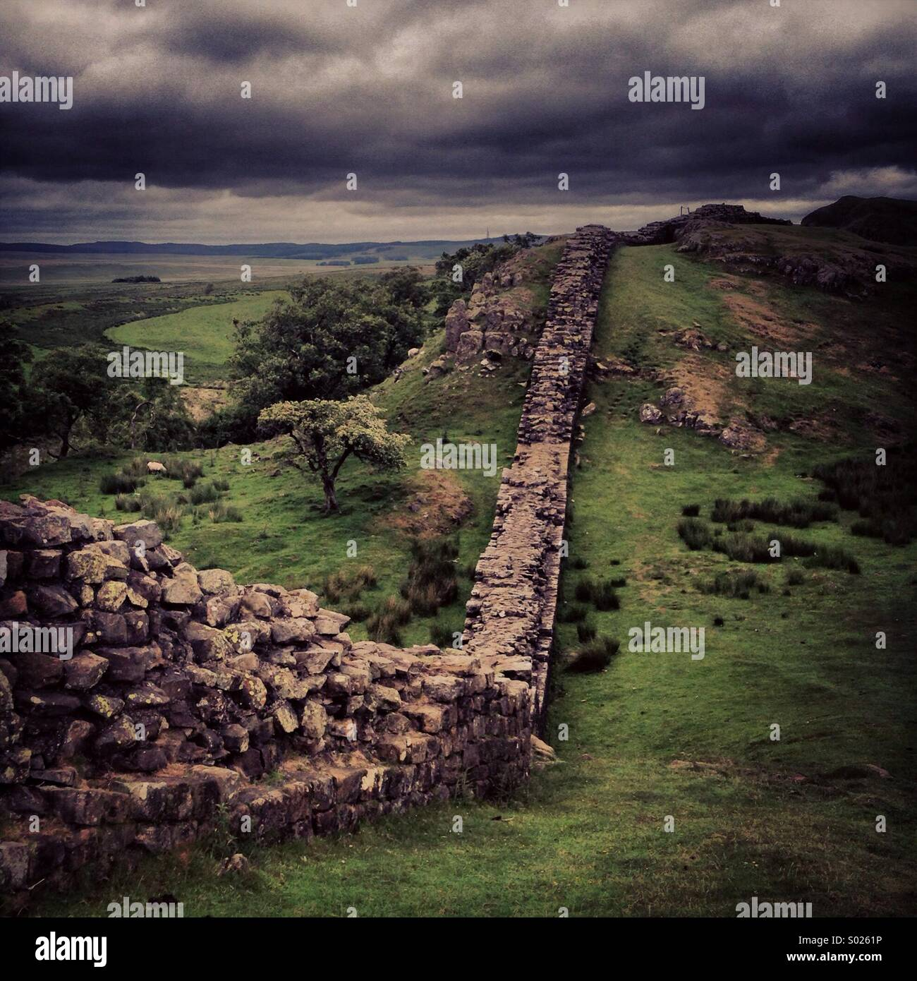 Hadrian's Wall - The Crags - Stock Image