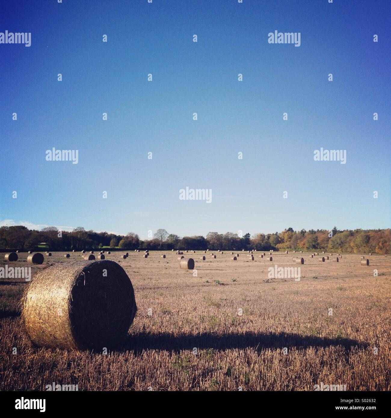 Hay Bails - Stock Image