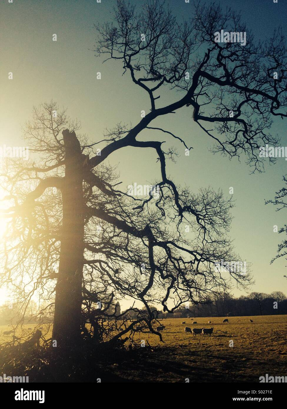 Broken tree - Stock Image