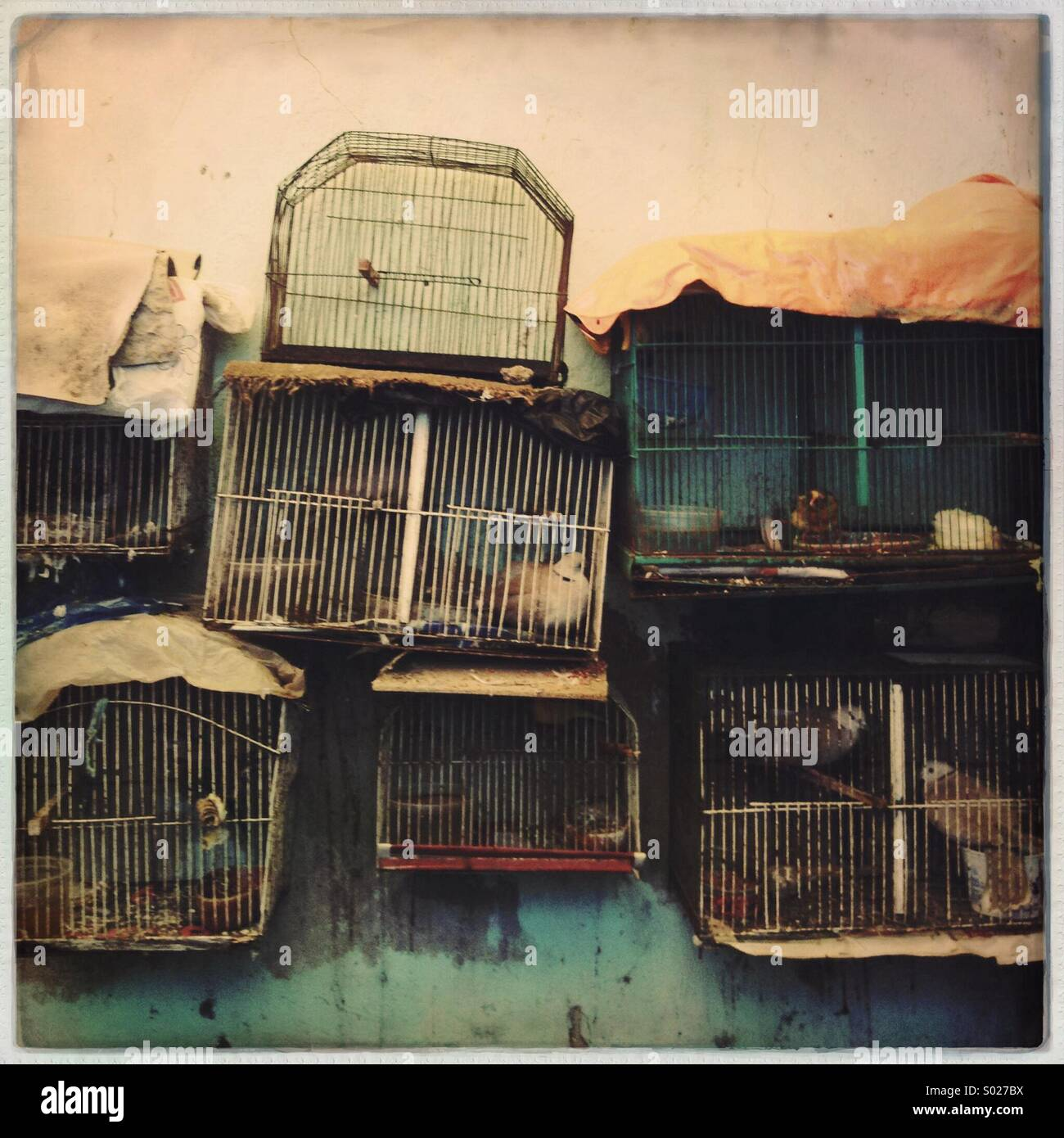 love the birds...in cage. - Stock Image