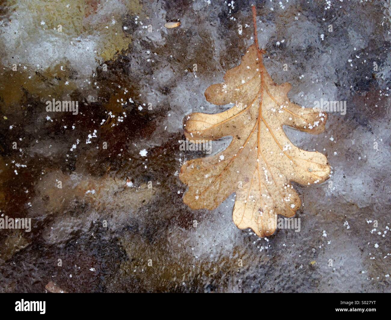December morning first snow fall on frozen pond - Stock Image