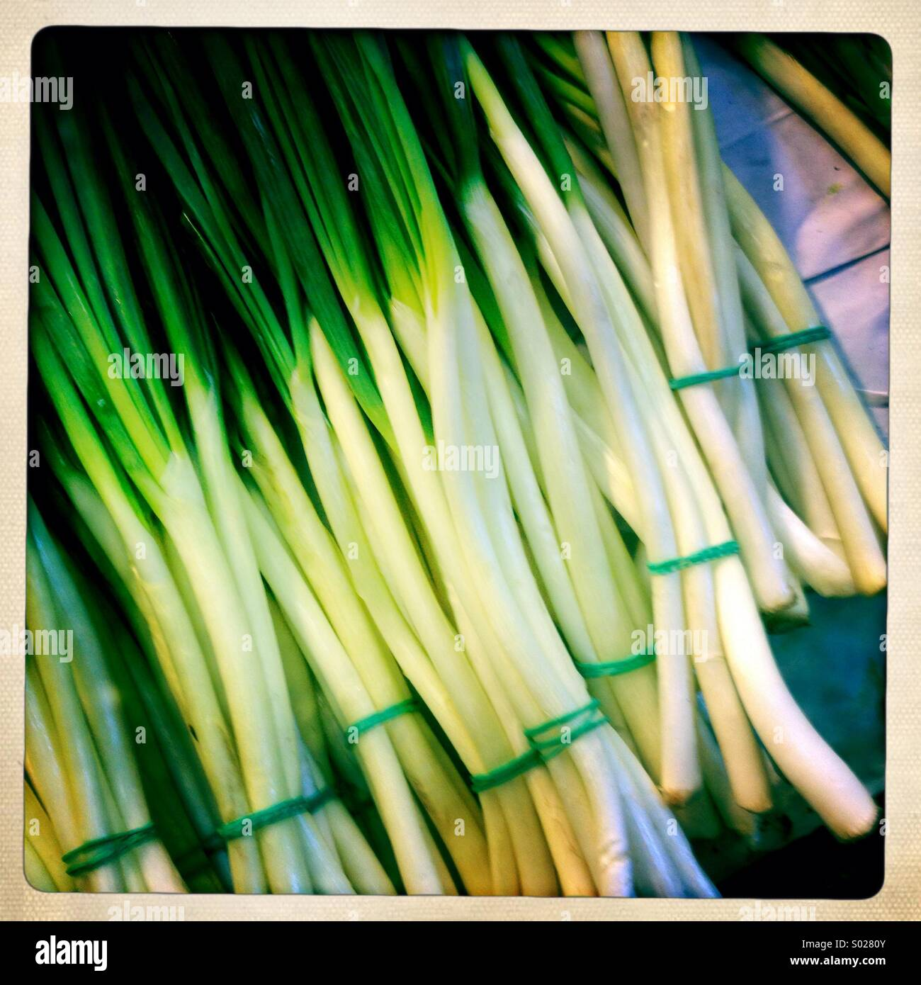 Fresh spring onions on market stall - Stock Image