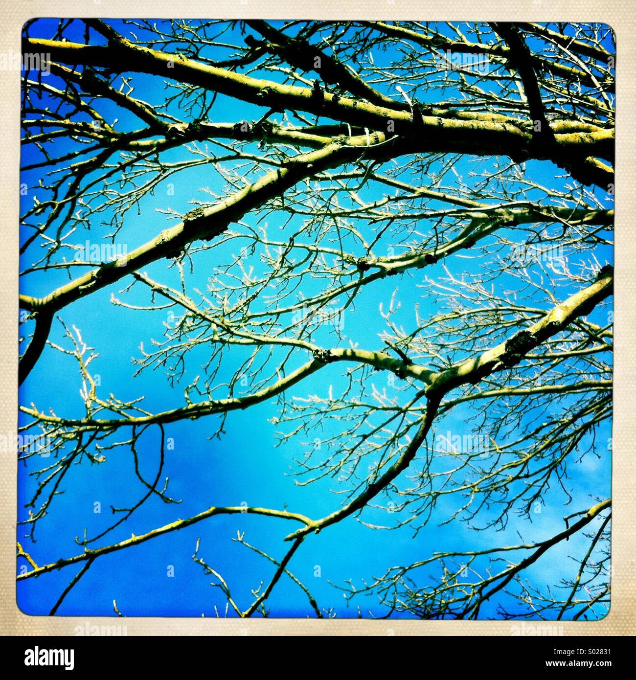 Bare branches against a clear blue sky - Stock Image