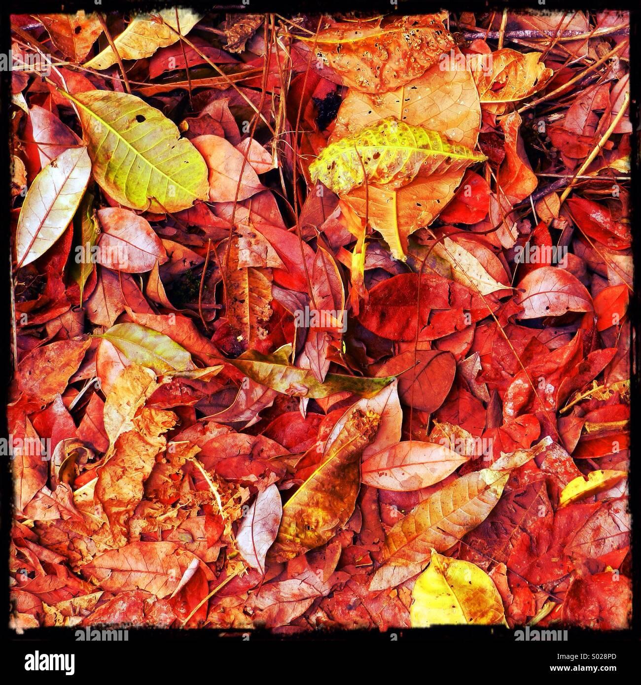 Autumn leafs - Stock Image