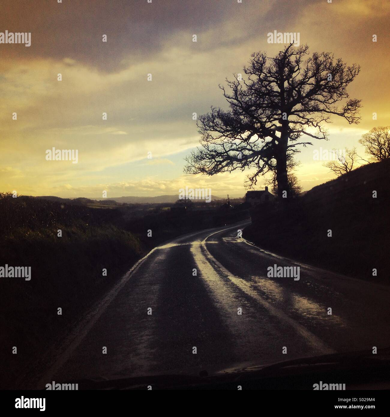 Wet road with bare tree silhouetted against a dramatic cloudy evening sky - Stock Image